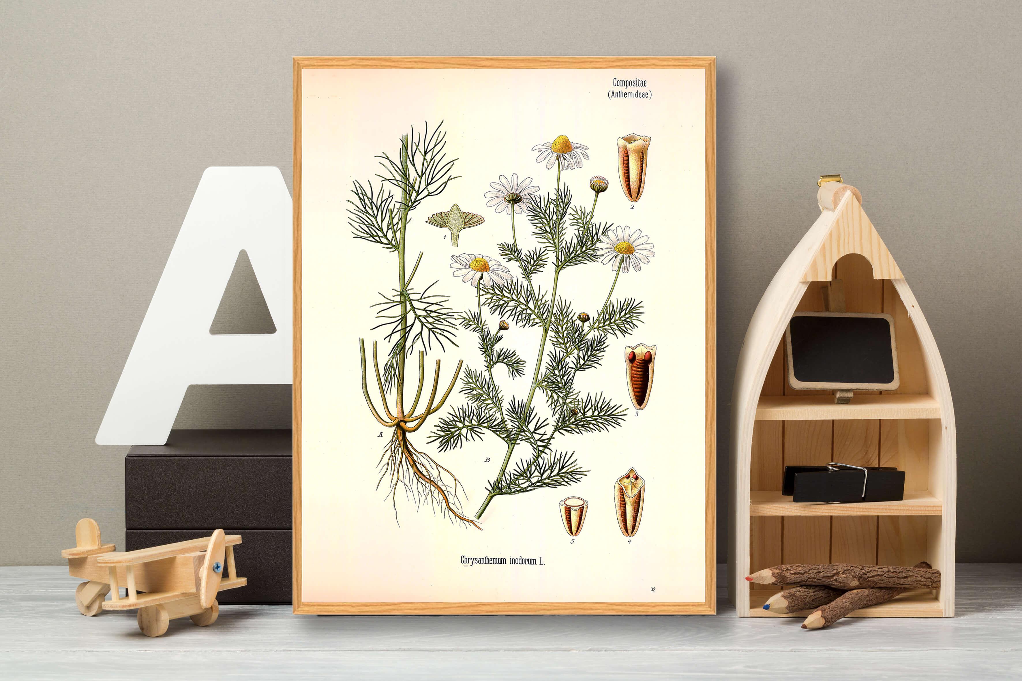 Chrysanthemum-plakat-3