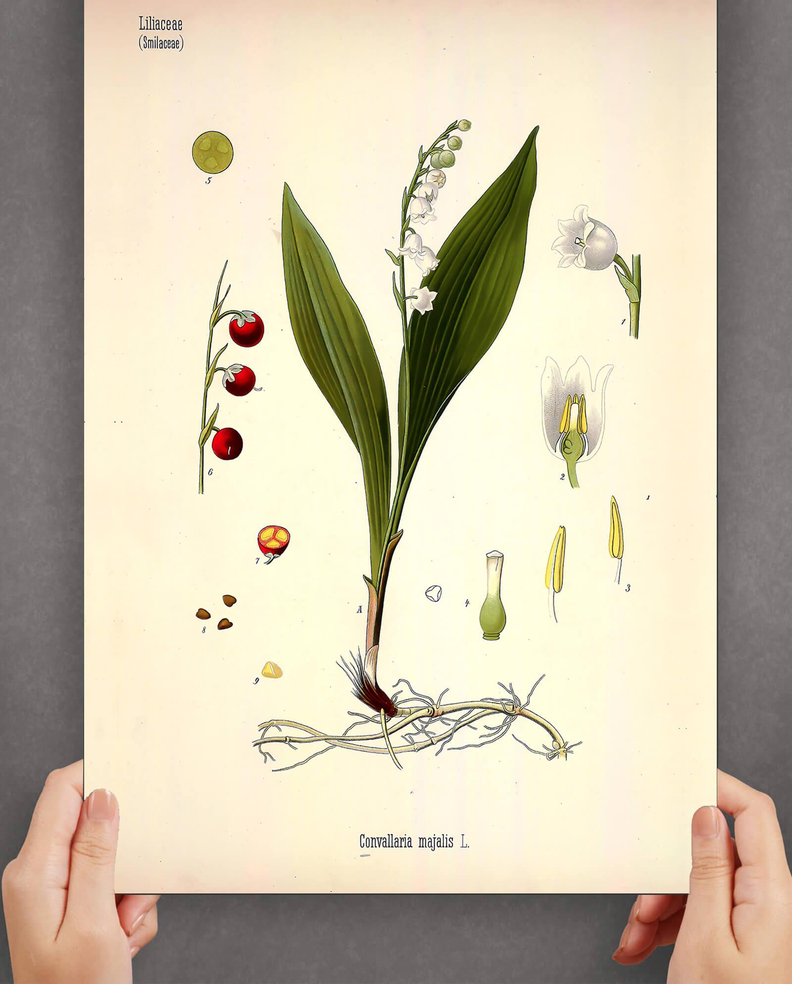Liljekonval-plakat-2