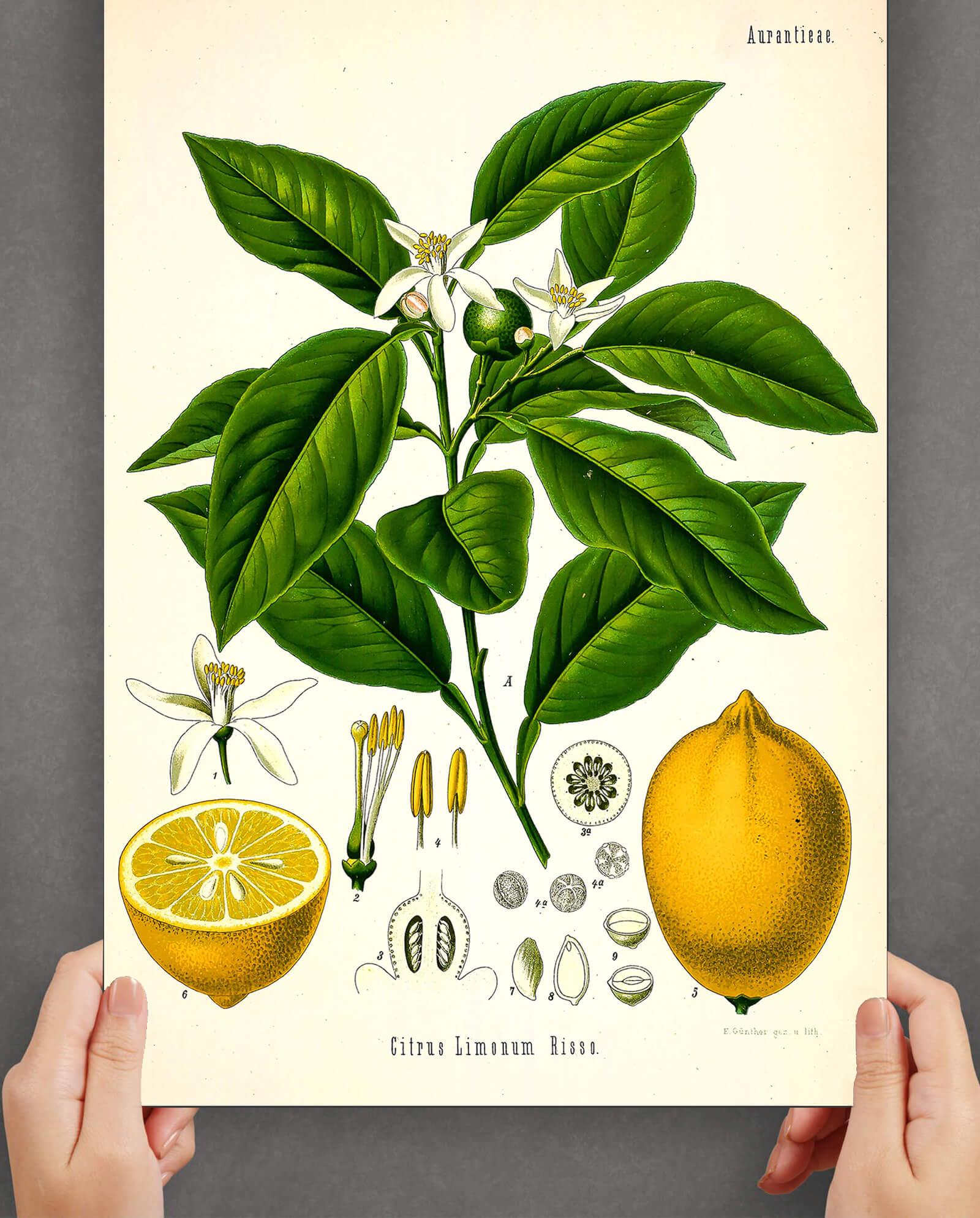 citron-plakat-2