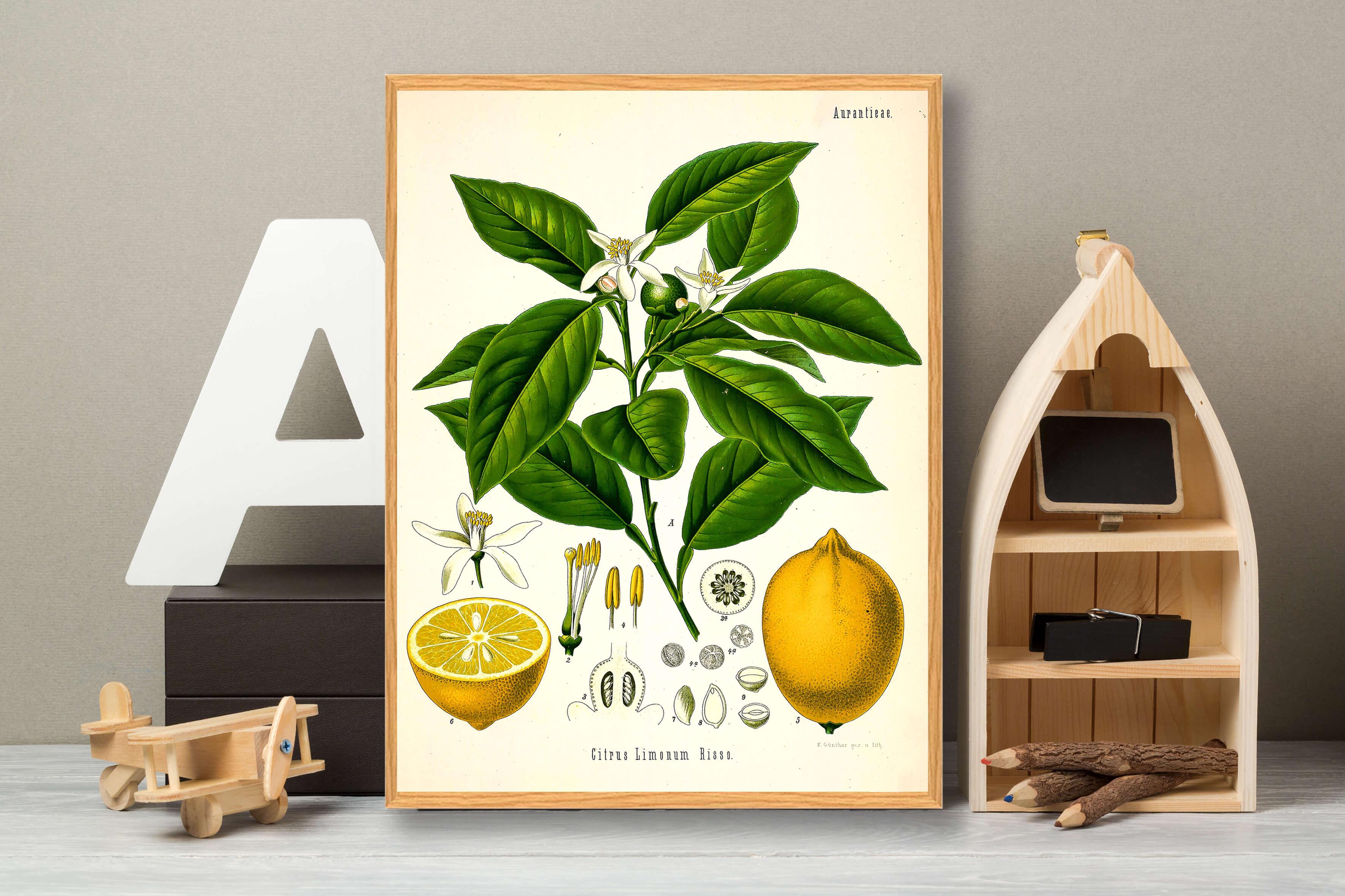 citron-plakat-3