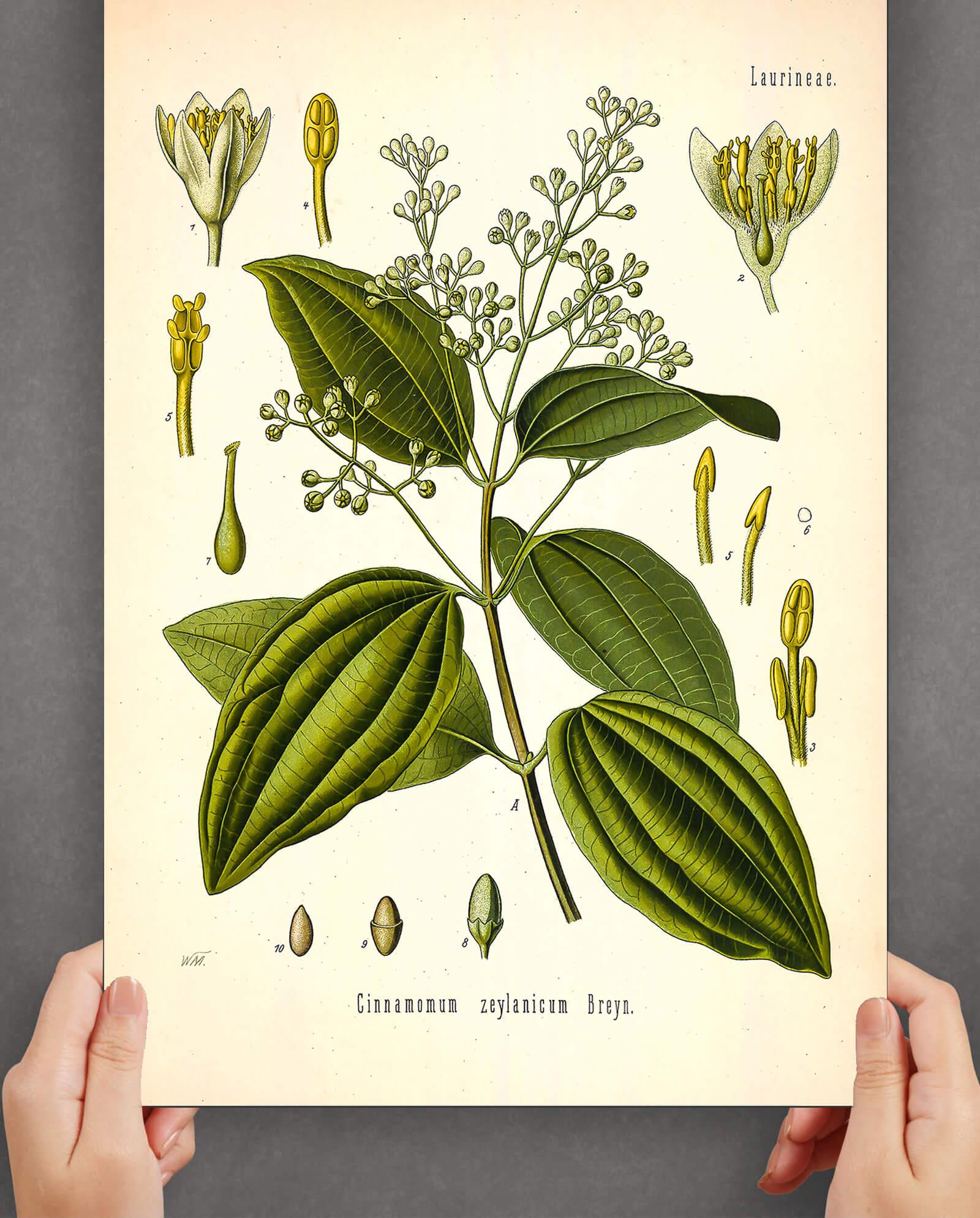 kanelplante-plakat-2