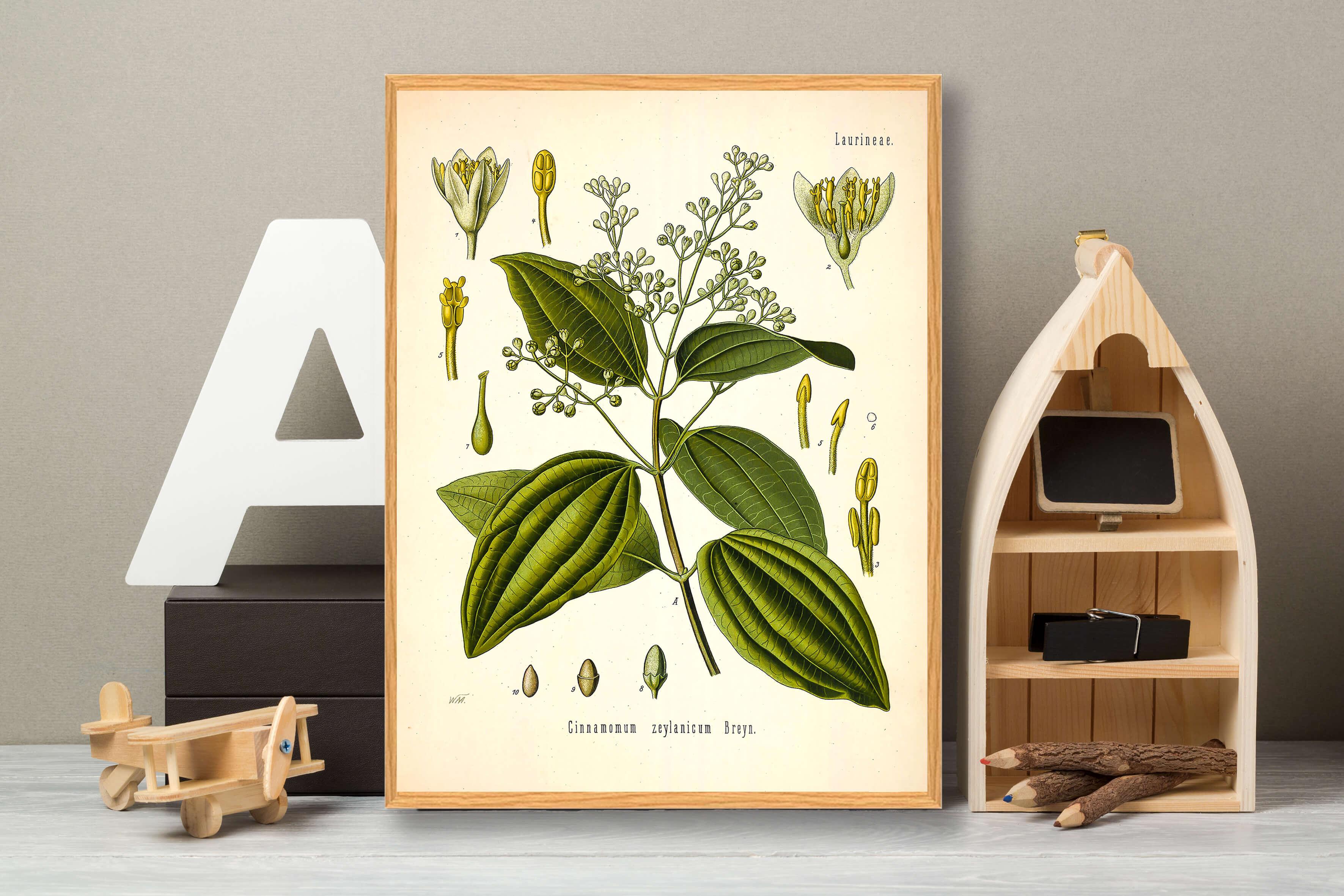 kanelplante-plakat-3