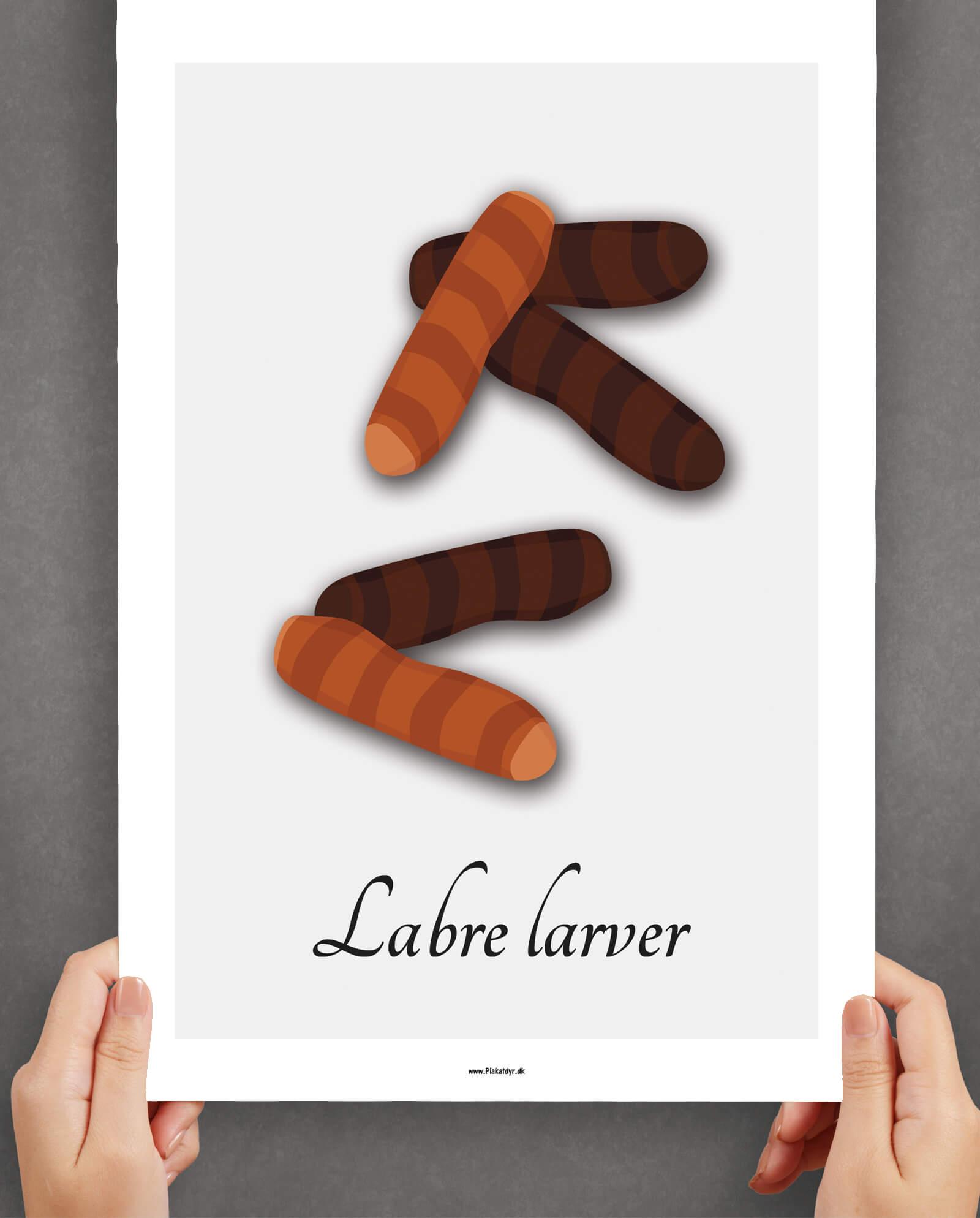 labre-larver-graa-2