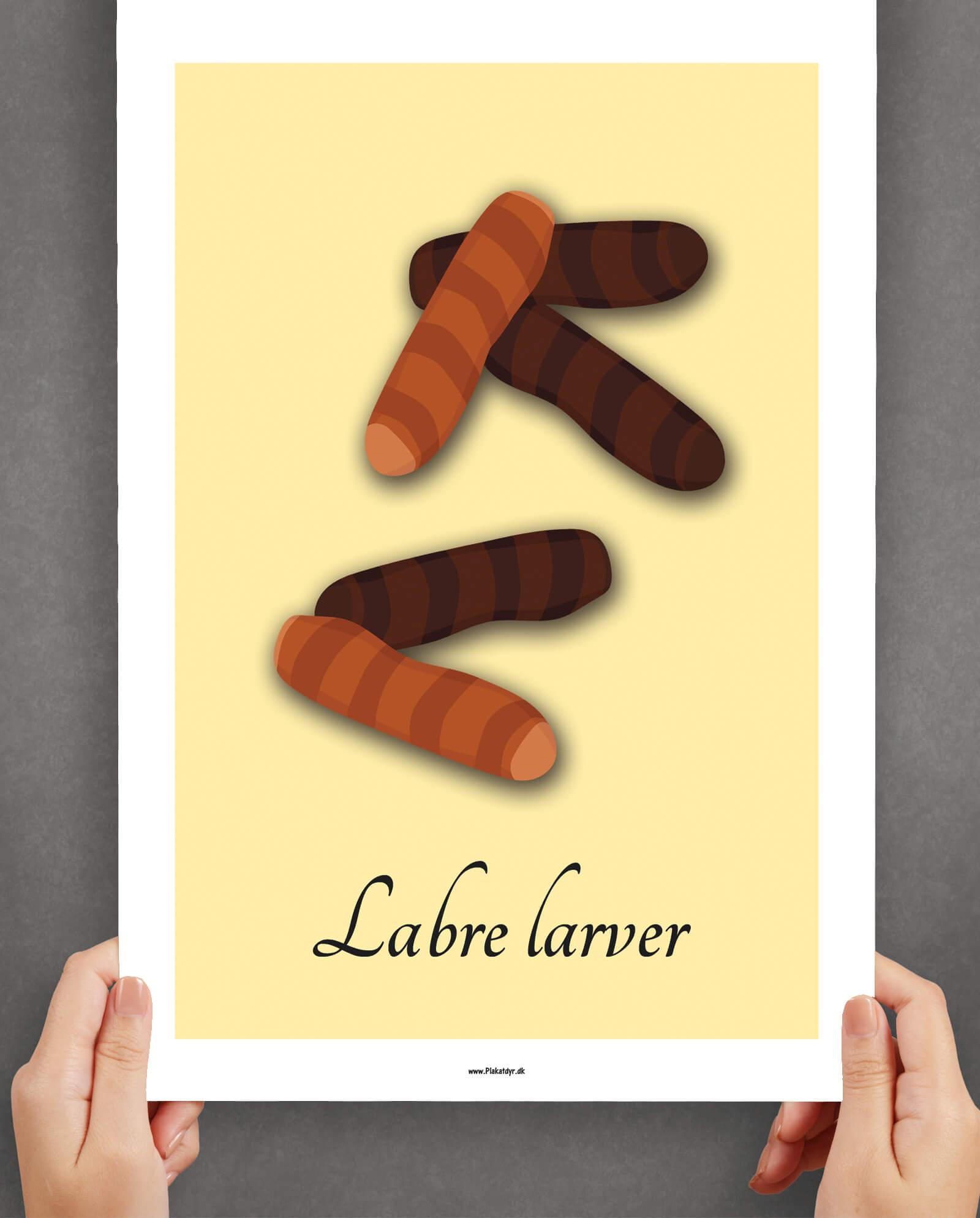 labre-larver-gul-2