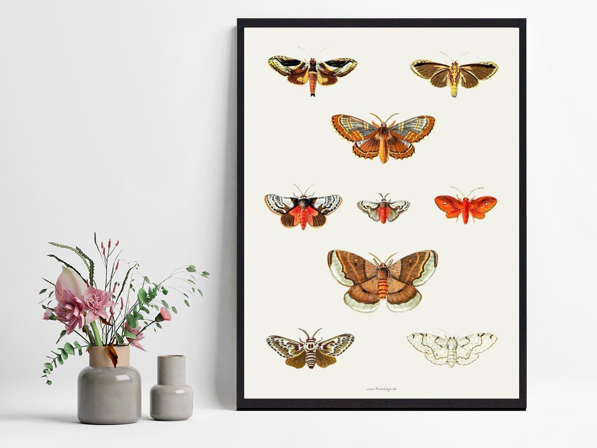 Boligplakat-sommerfugle-koeb-2