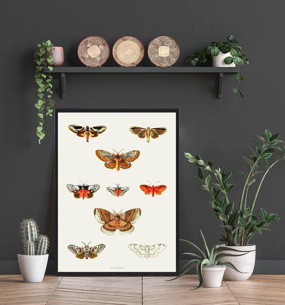 Boligplakat-sommerfugle-koeb-3