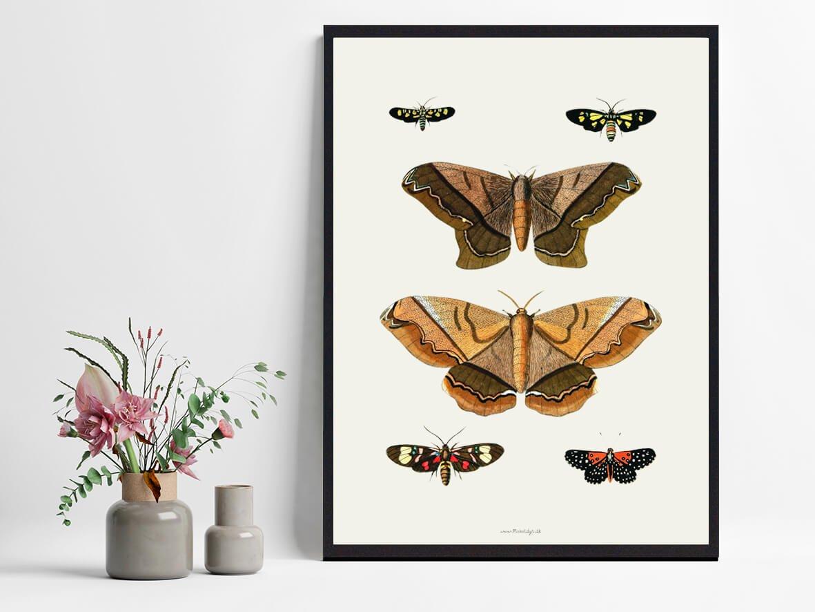 Sommerfugleplakater-2