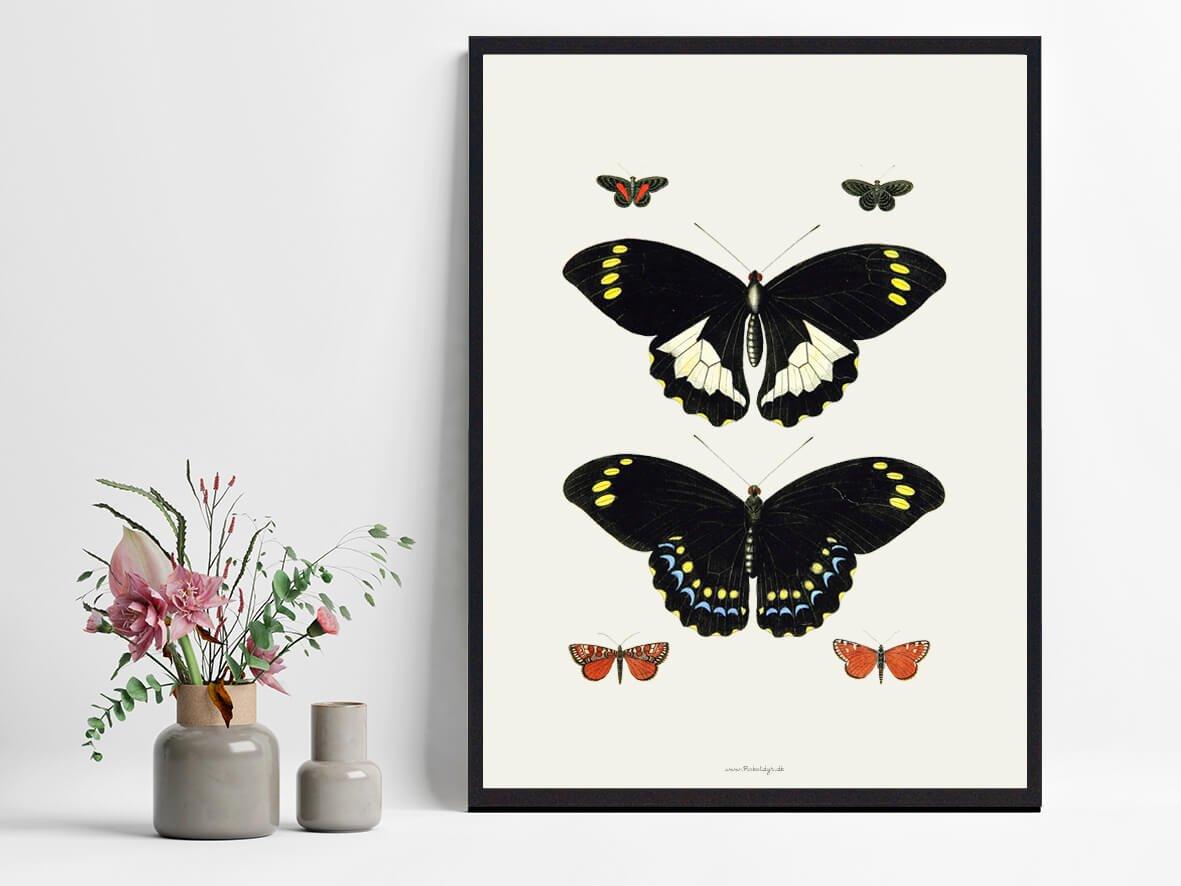 plakat-med-sommerfugle-2