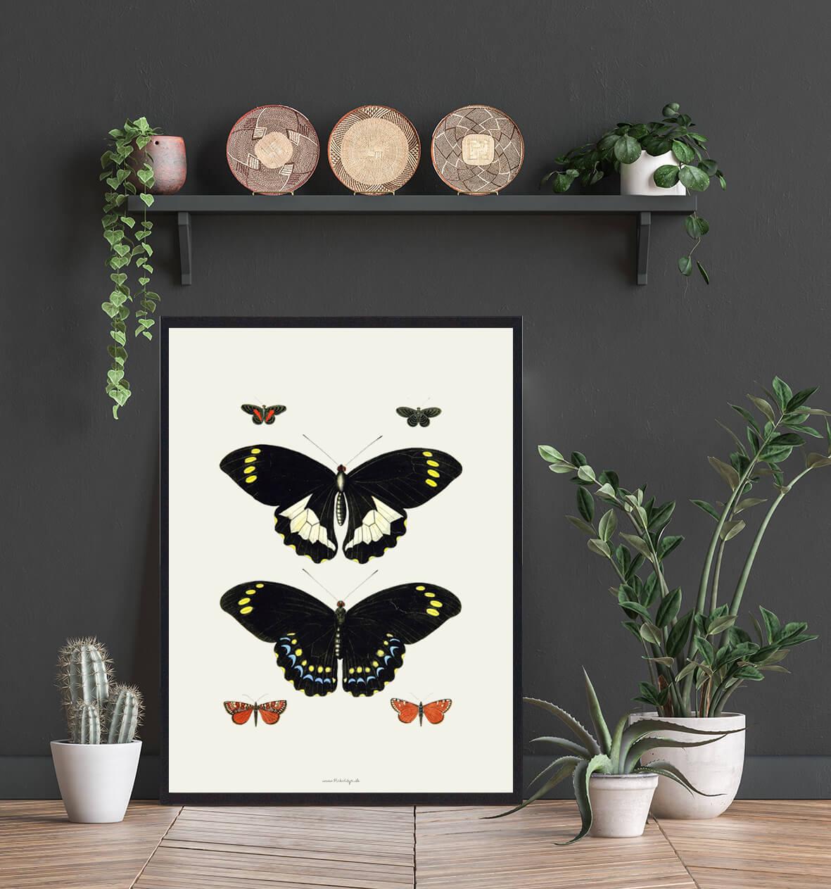 plakat-med-sommerfugle-3