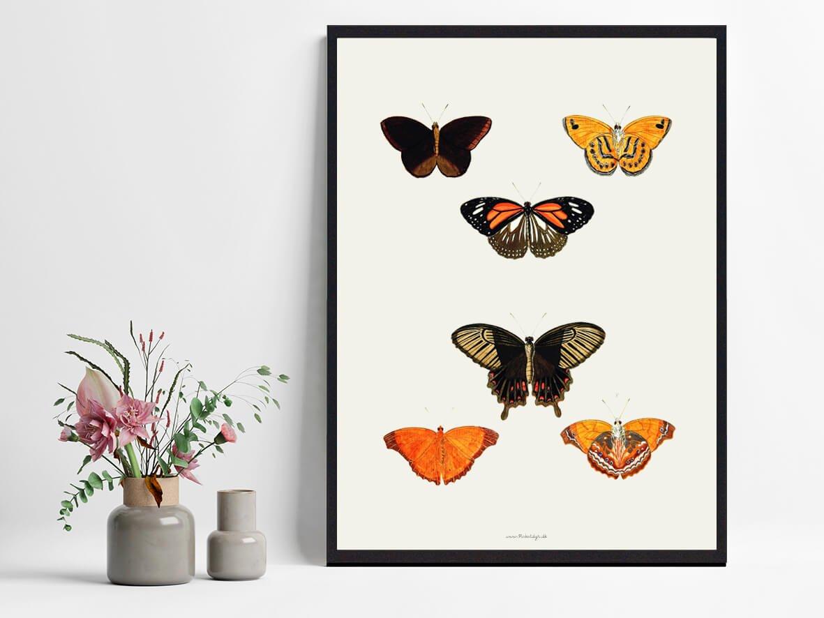 plakat-med-sommerfugle-bolig-2