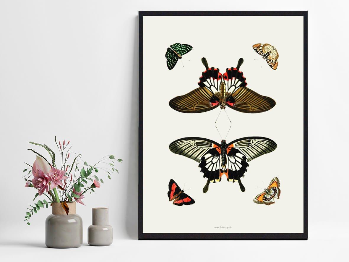 plakat-med-sommerfugle-boligindretning-2