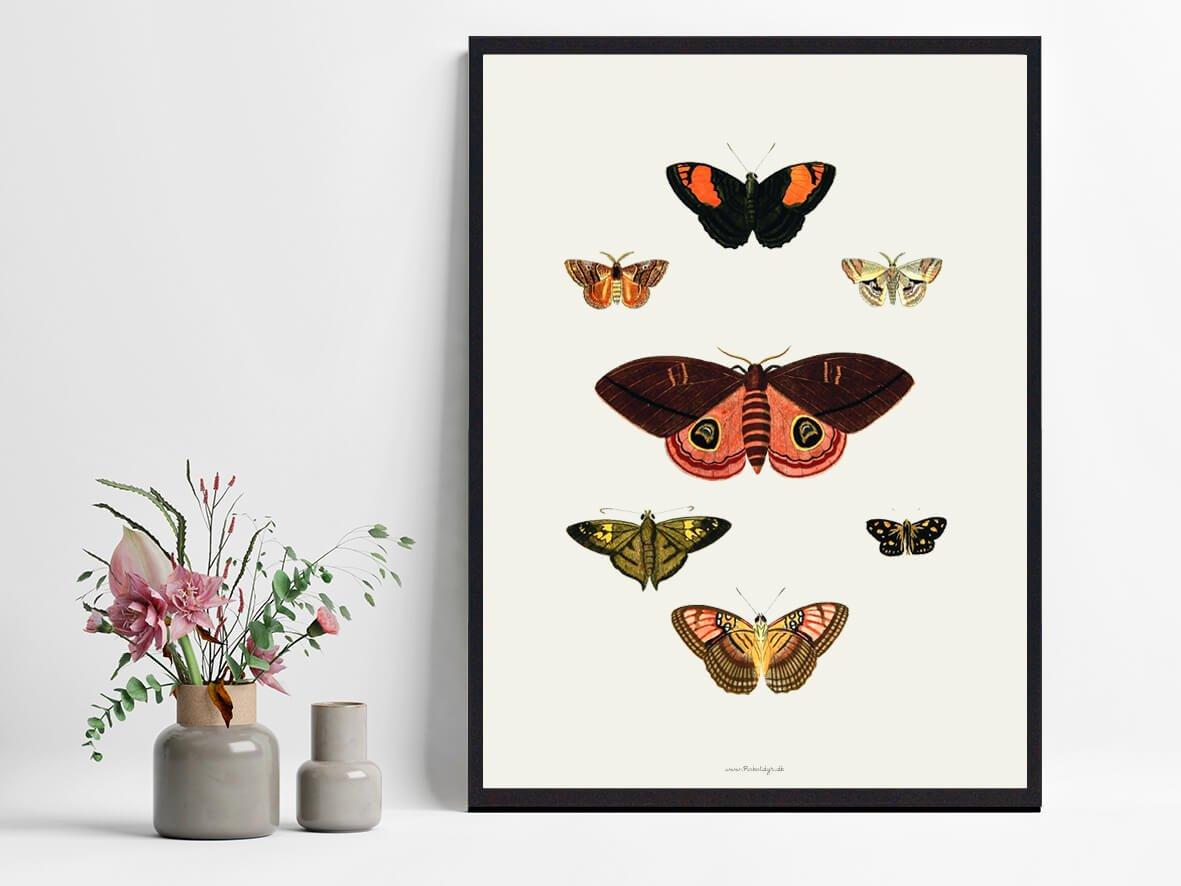 plakat-sommerfugle-2