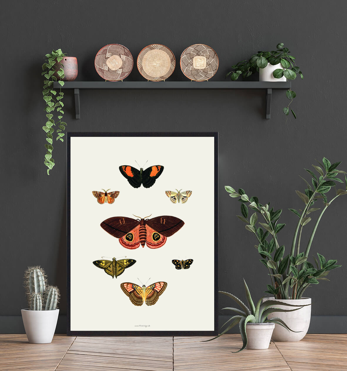 plakat-sommerfugle-3