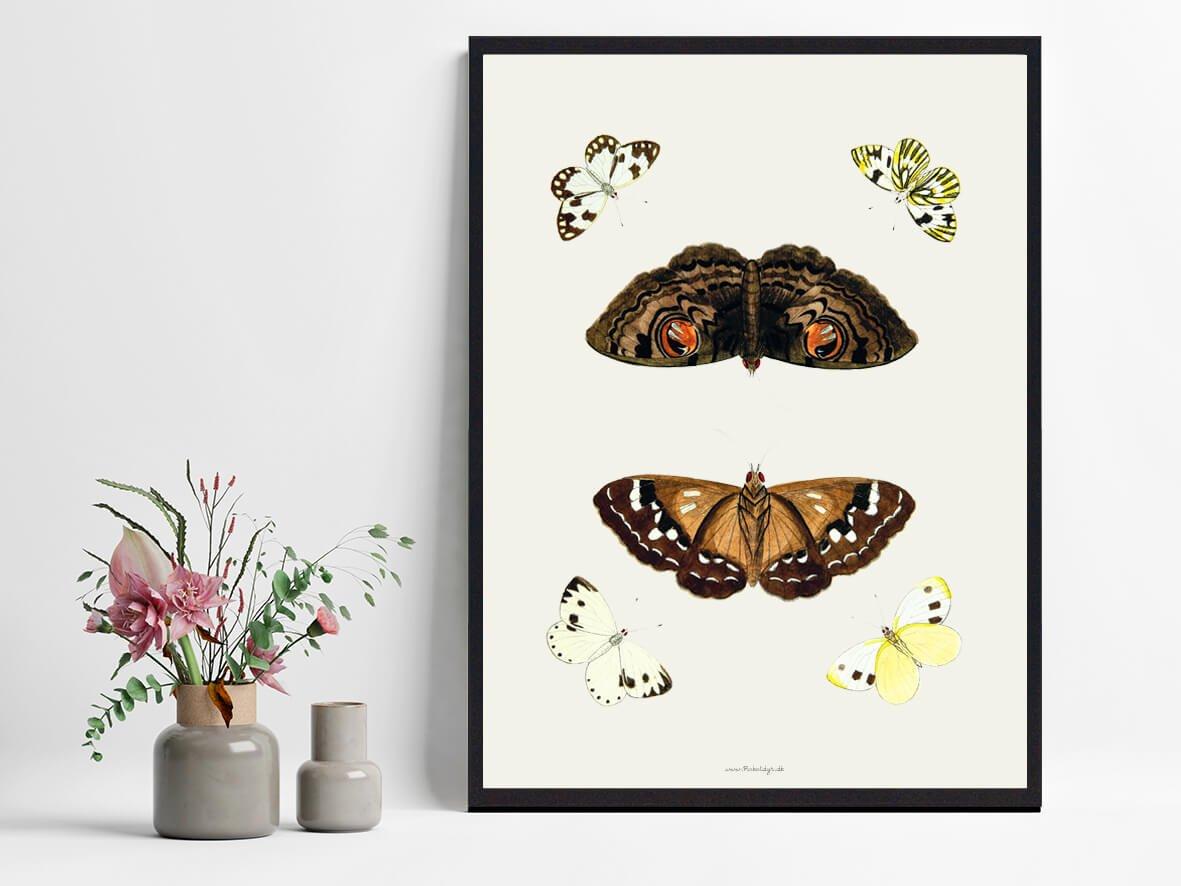 plakat-sommerfugle-bolig-2