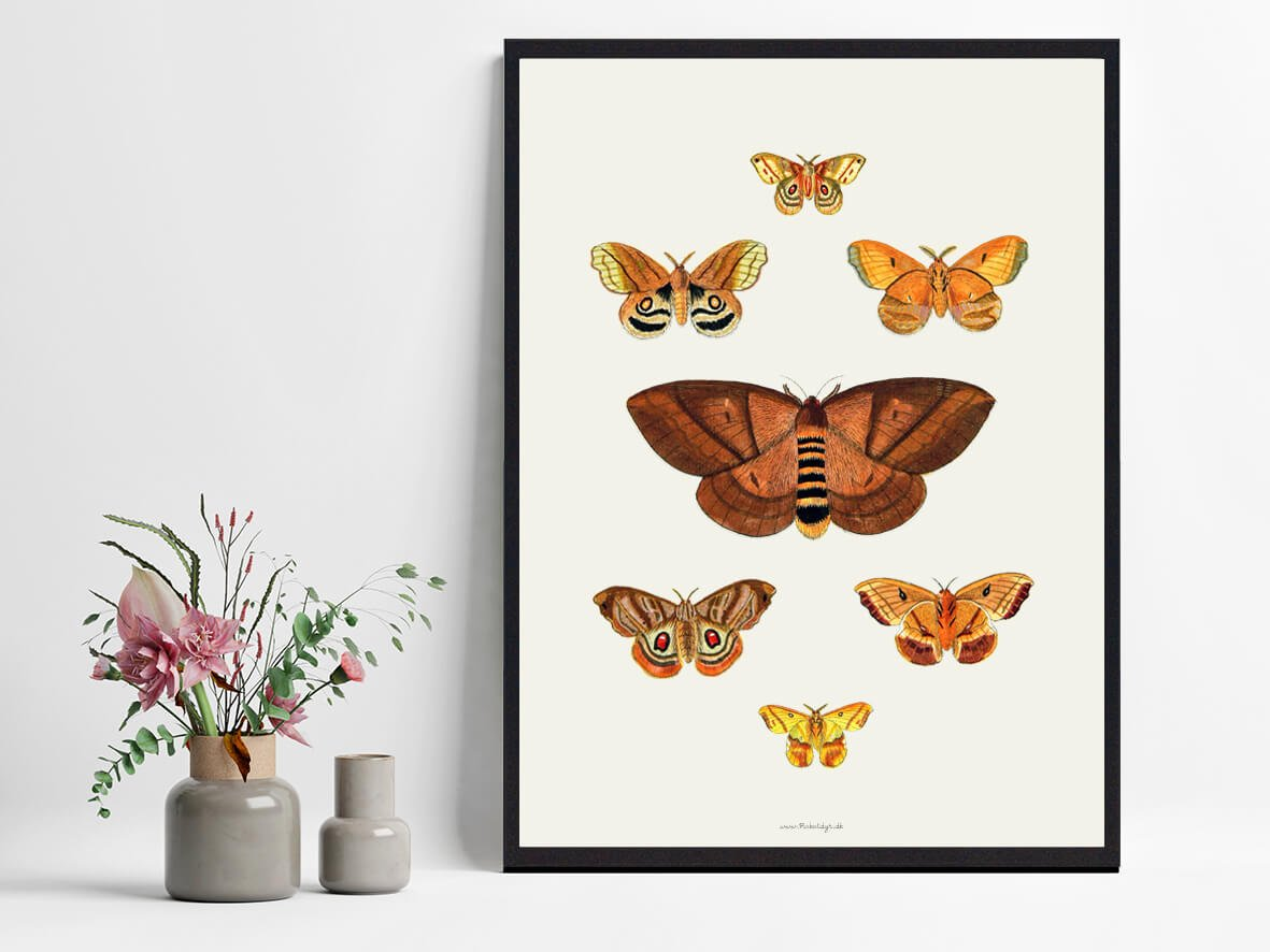 plakat-sommerfugle-boligen-2