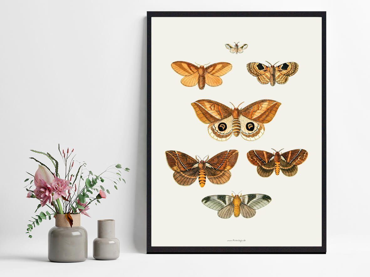 plakat-sommerfugle-boligindretning-2