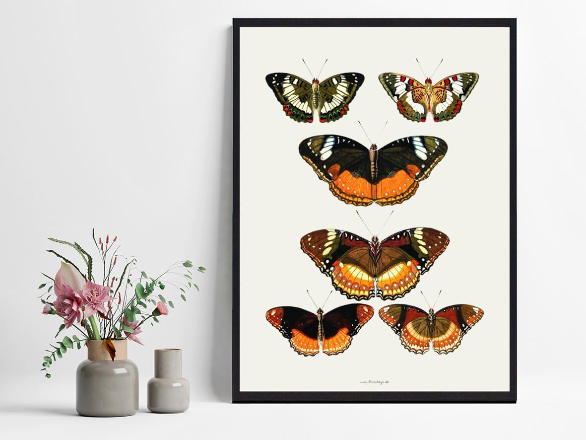plakat-sommerfugle-indretning-2