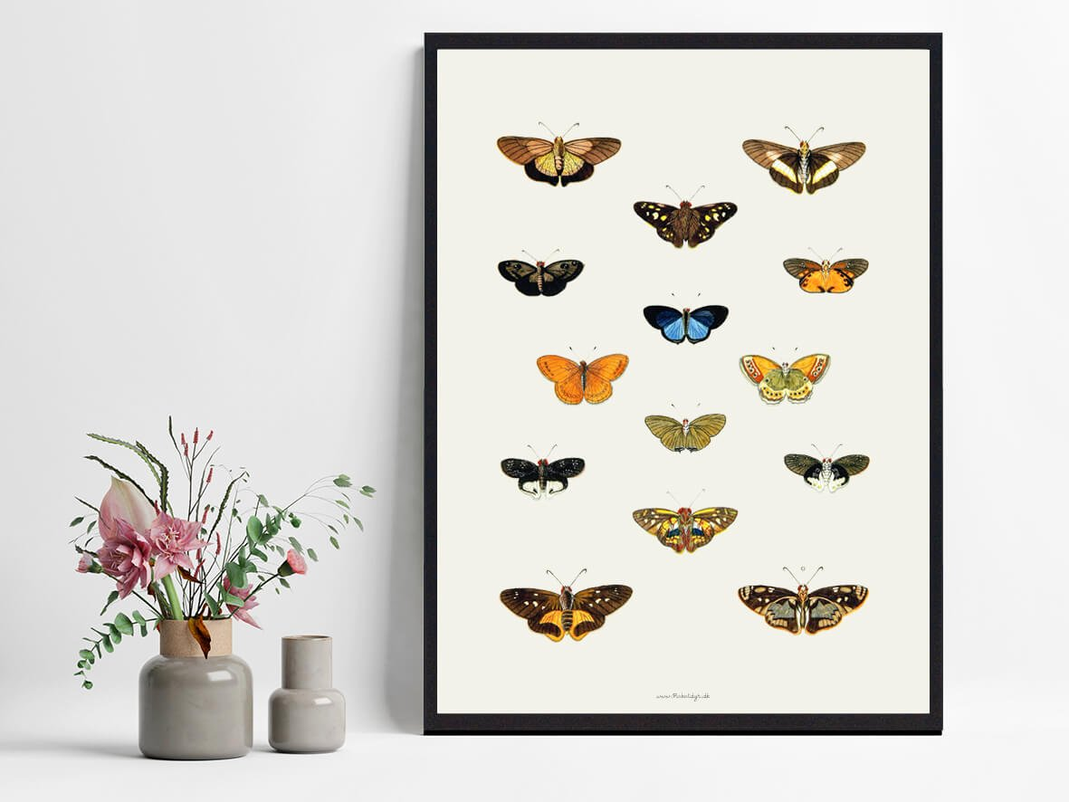 plakat-sommerfugle-koeb-2