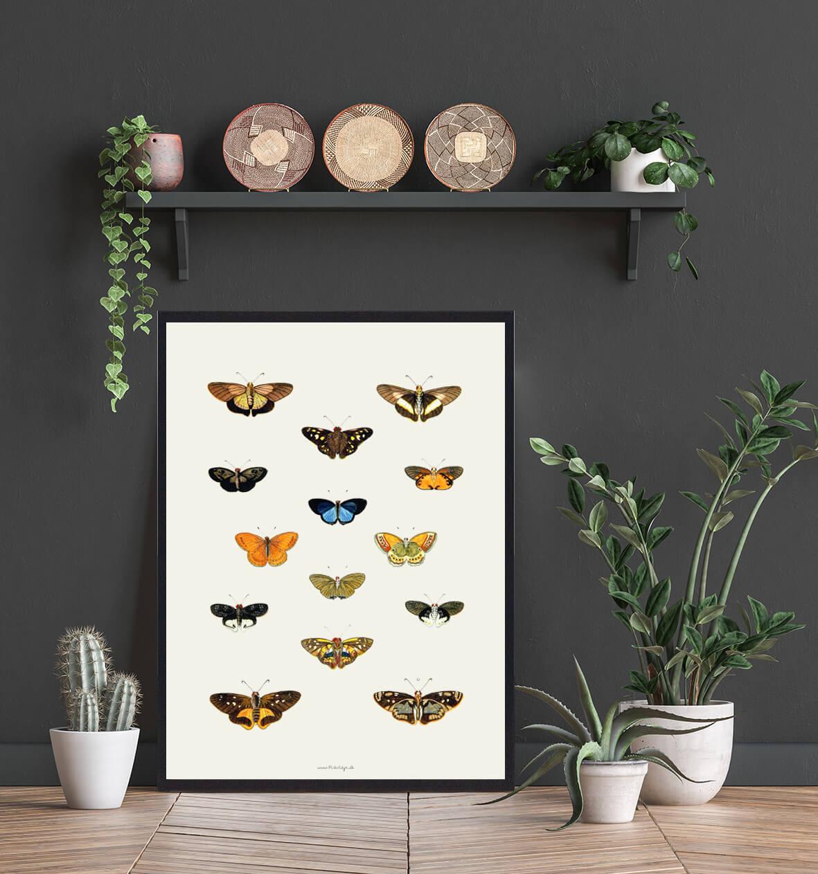 plakat-sommerfugle-koeb-3