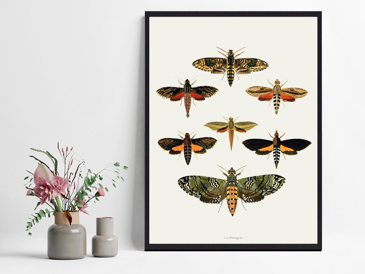 plakat-sommerfugle-tilbud-2