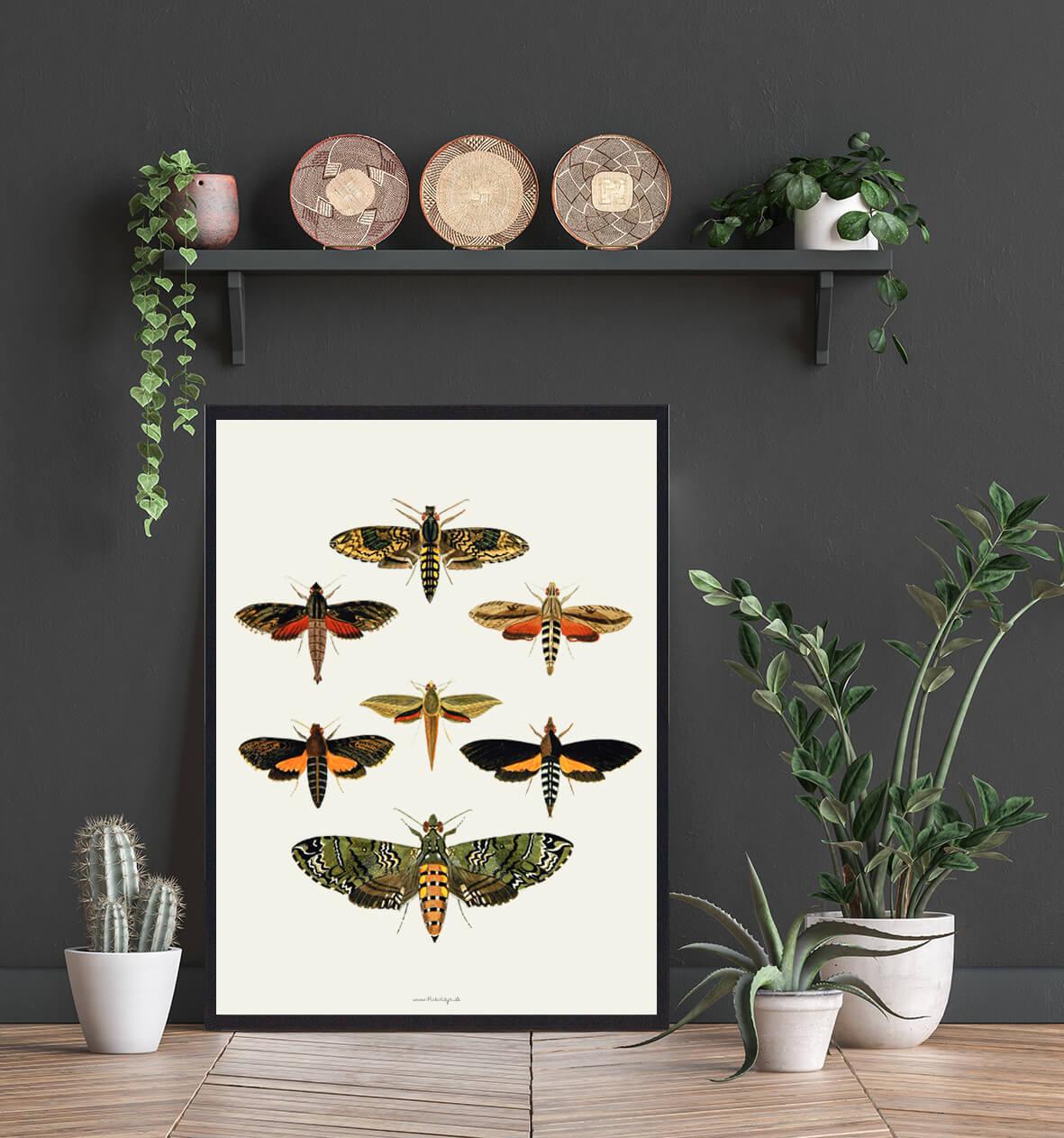 plakat-sommerfugle-tilbud-3
