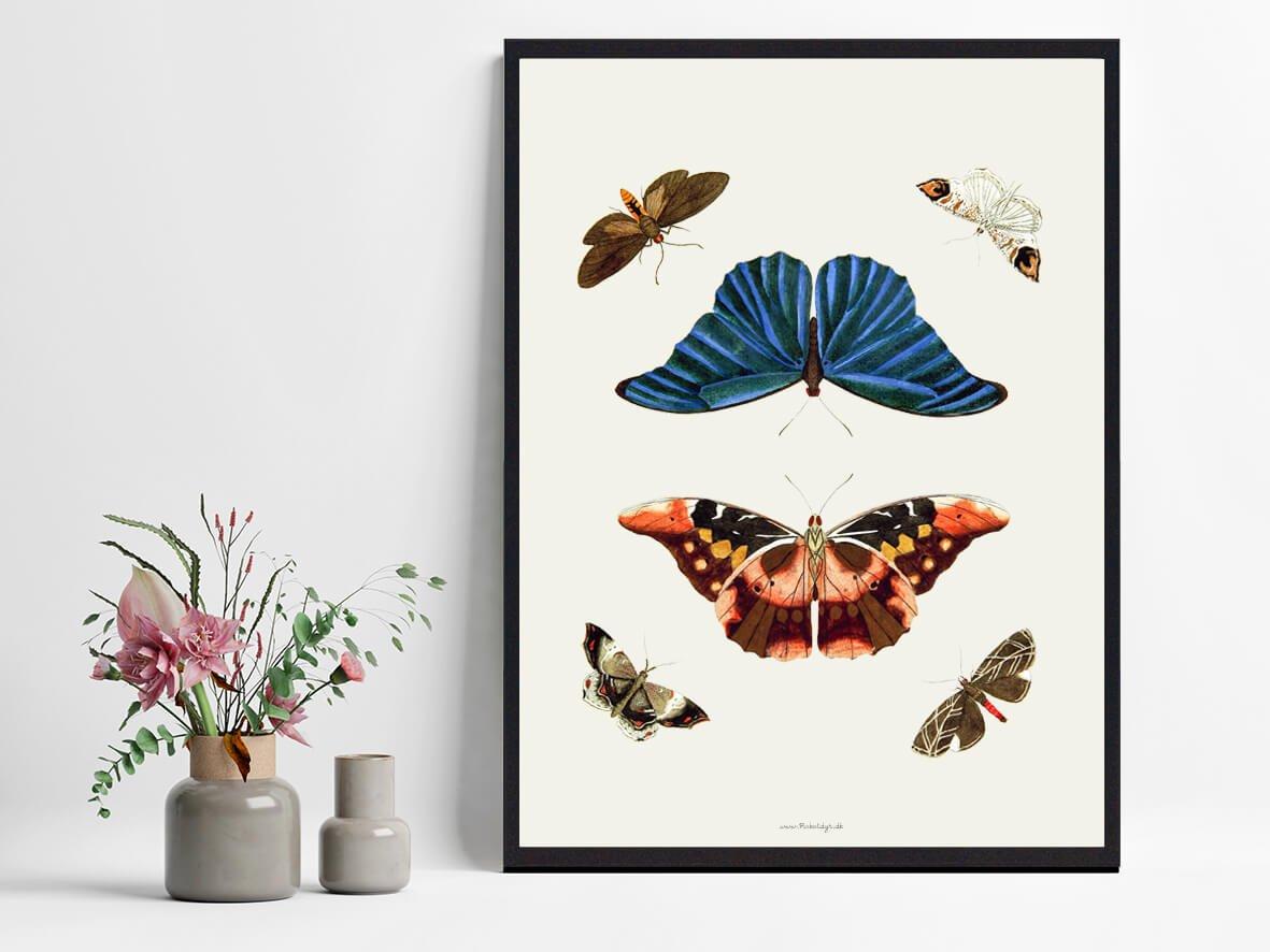 sommerfugle-plakat-2