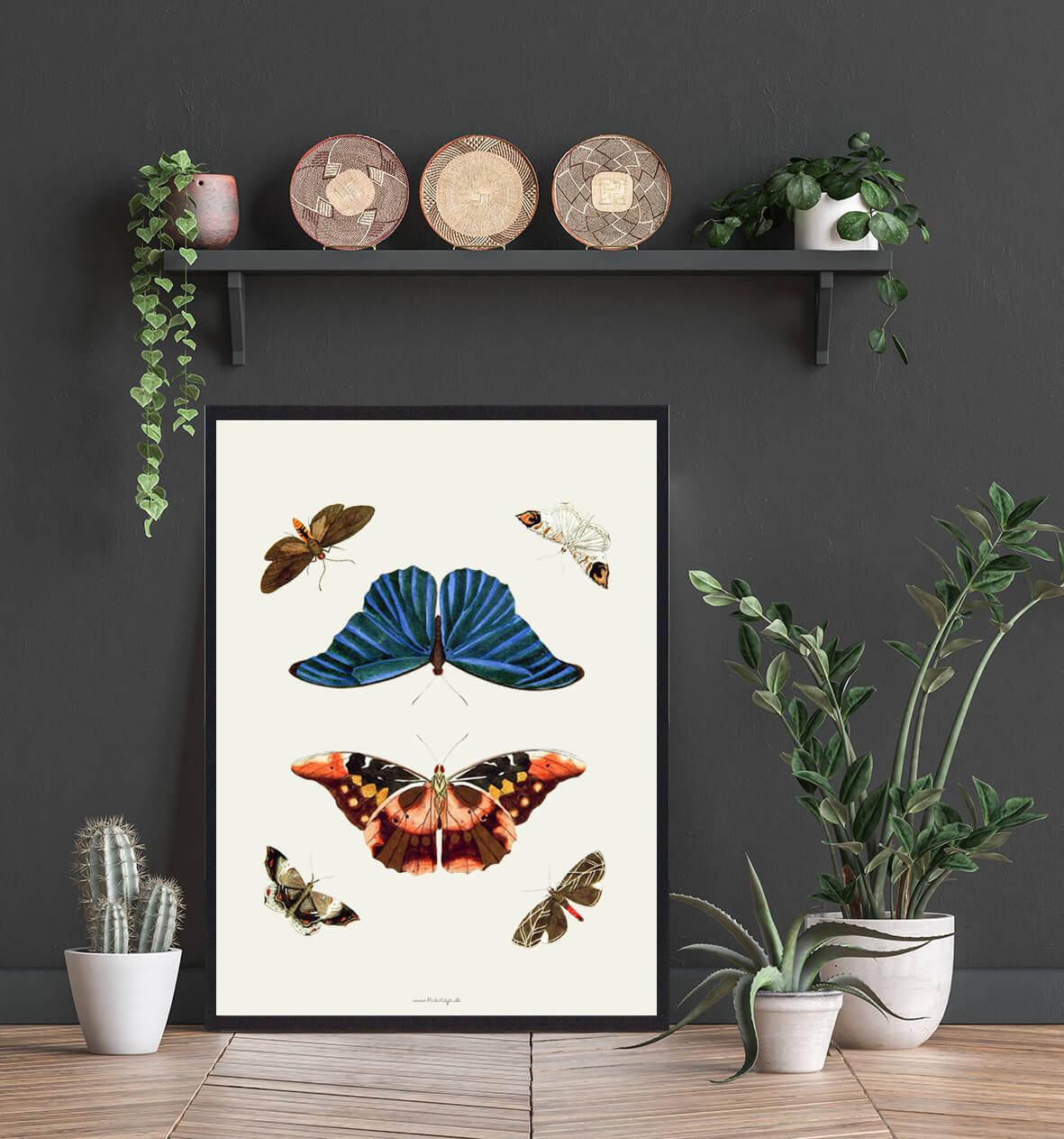 sommerfugle-plakat-3