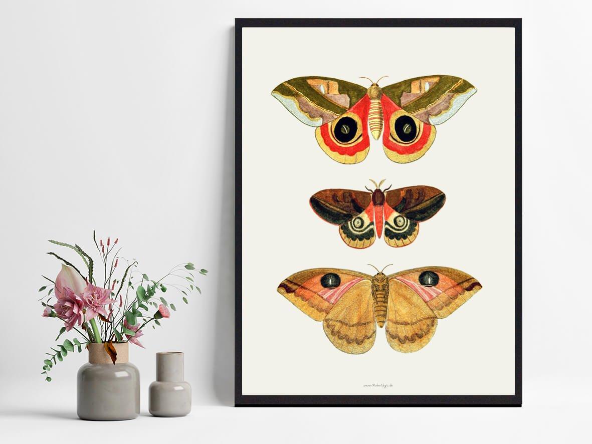 sommerfugle-plakat-bolig-2