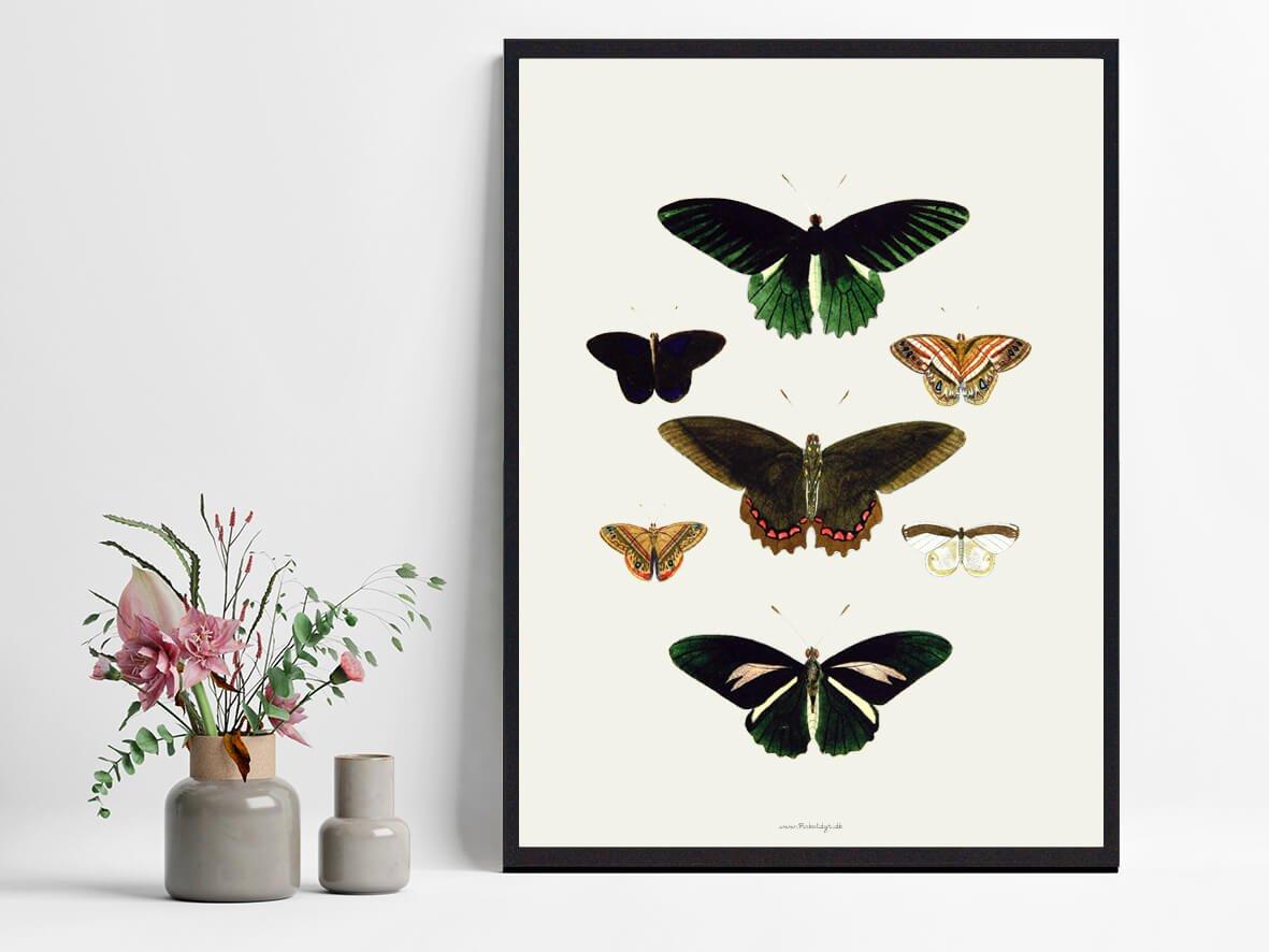 sommerfugle-plakat-boligindretning-2