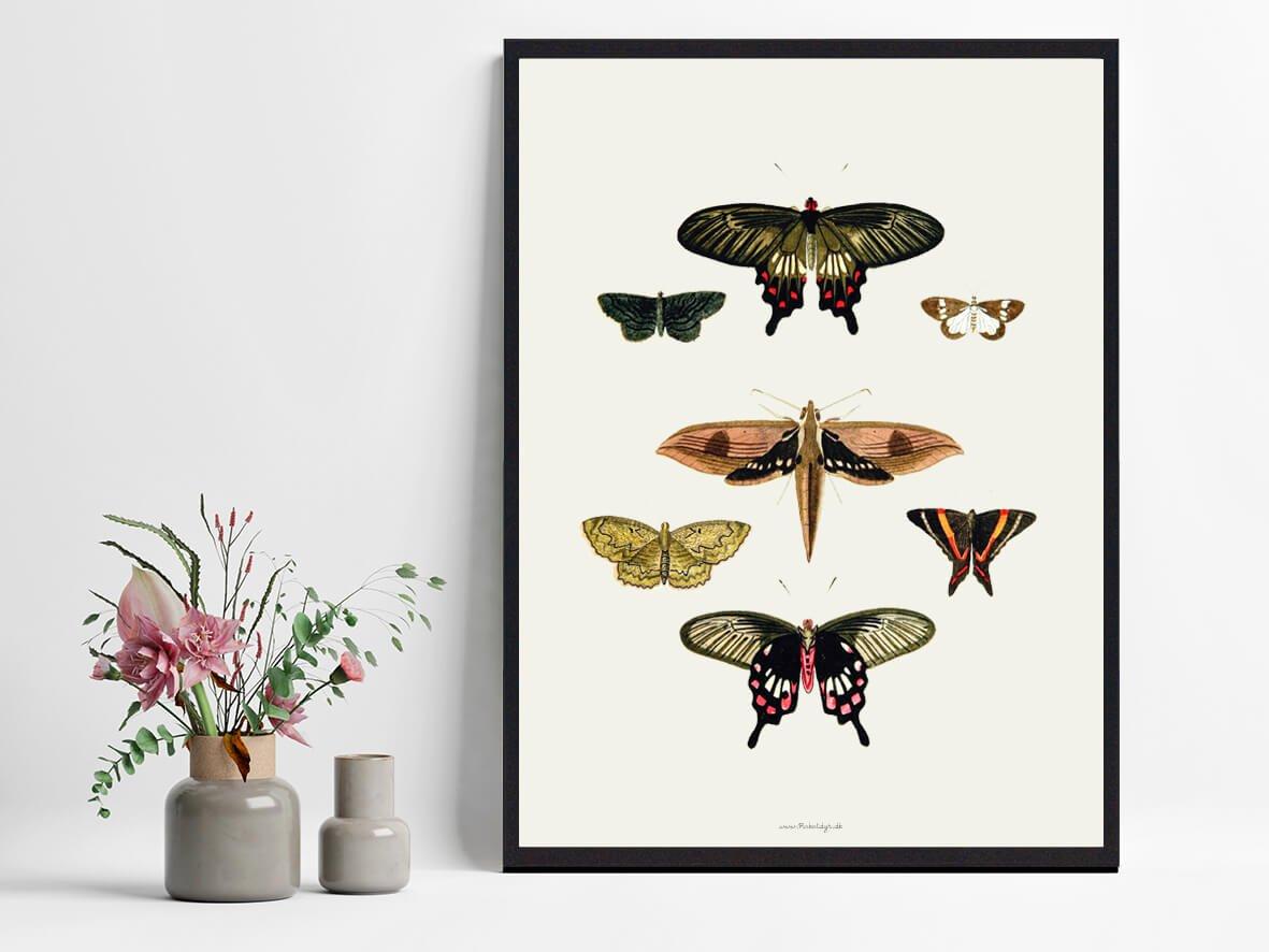 sommerfugle-plakat-koeb-2