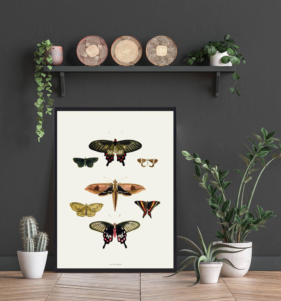 sommerfugle-plakat-koeb-3
