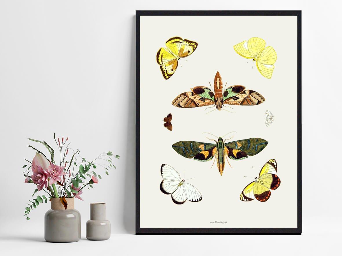 sommerfugle-plakat-tilbud-2