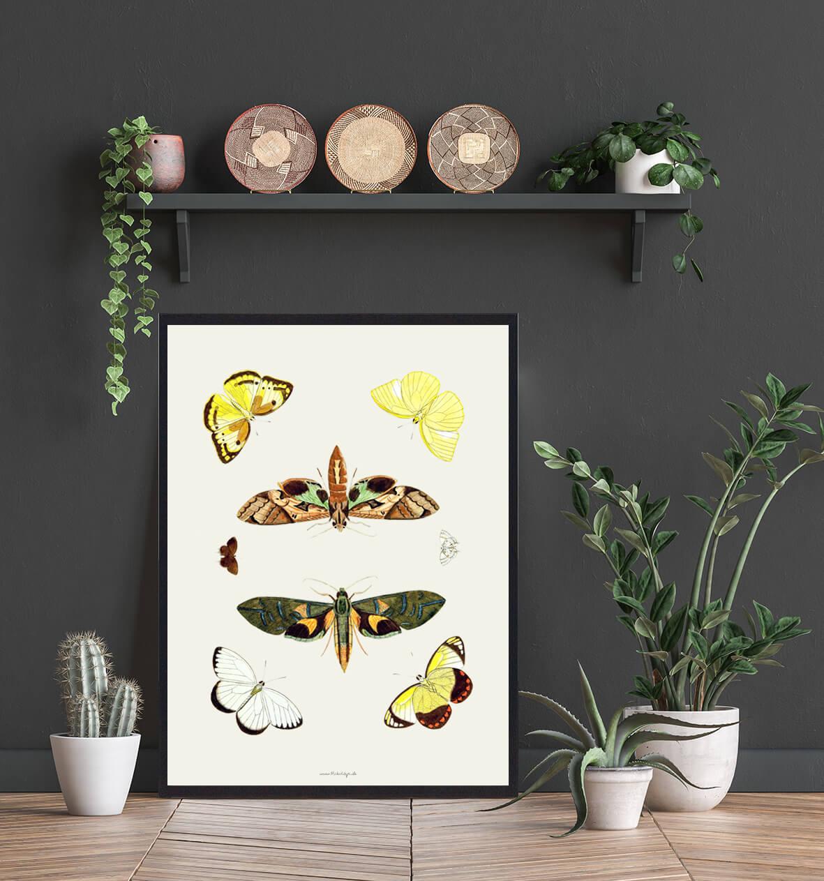 sommerfugle-plakat-tilbud-3