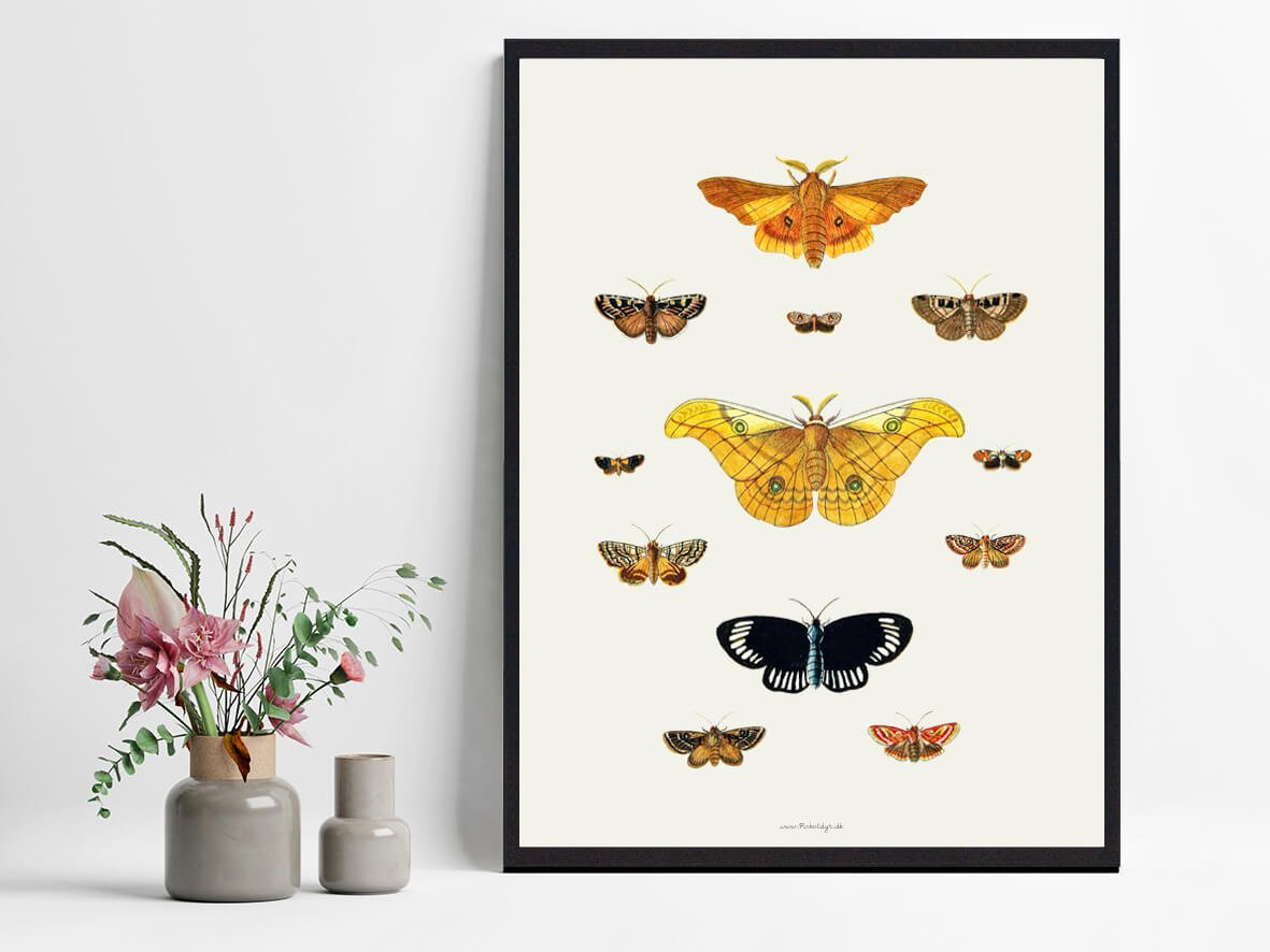 sommerfugle-plakater-2