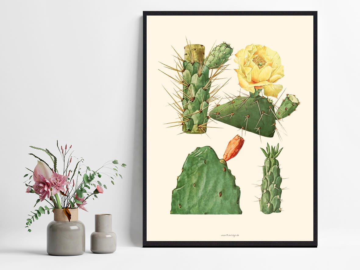 Boligplakat-kaktus-1