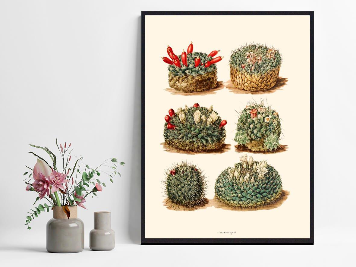 Kaktus-bolig-indretning-1