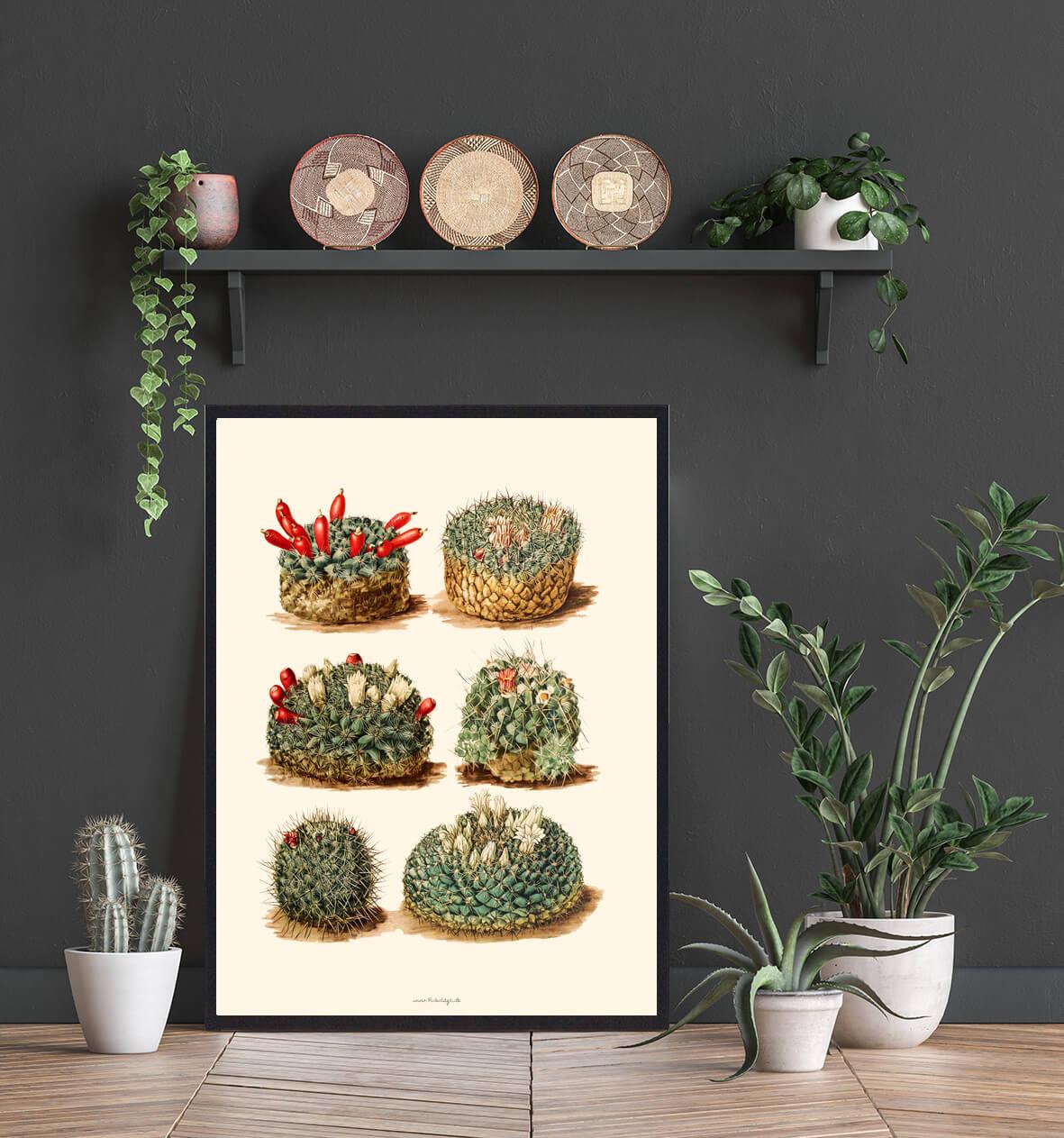 Kaktus-bolig-indretning-3
