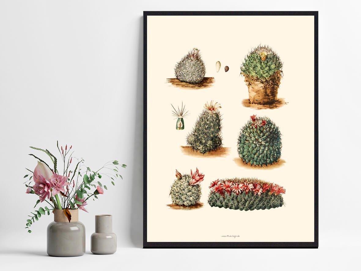 Kaktus-boligindretning-1