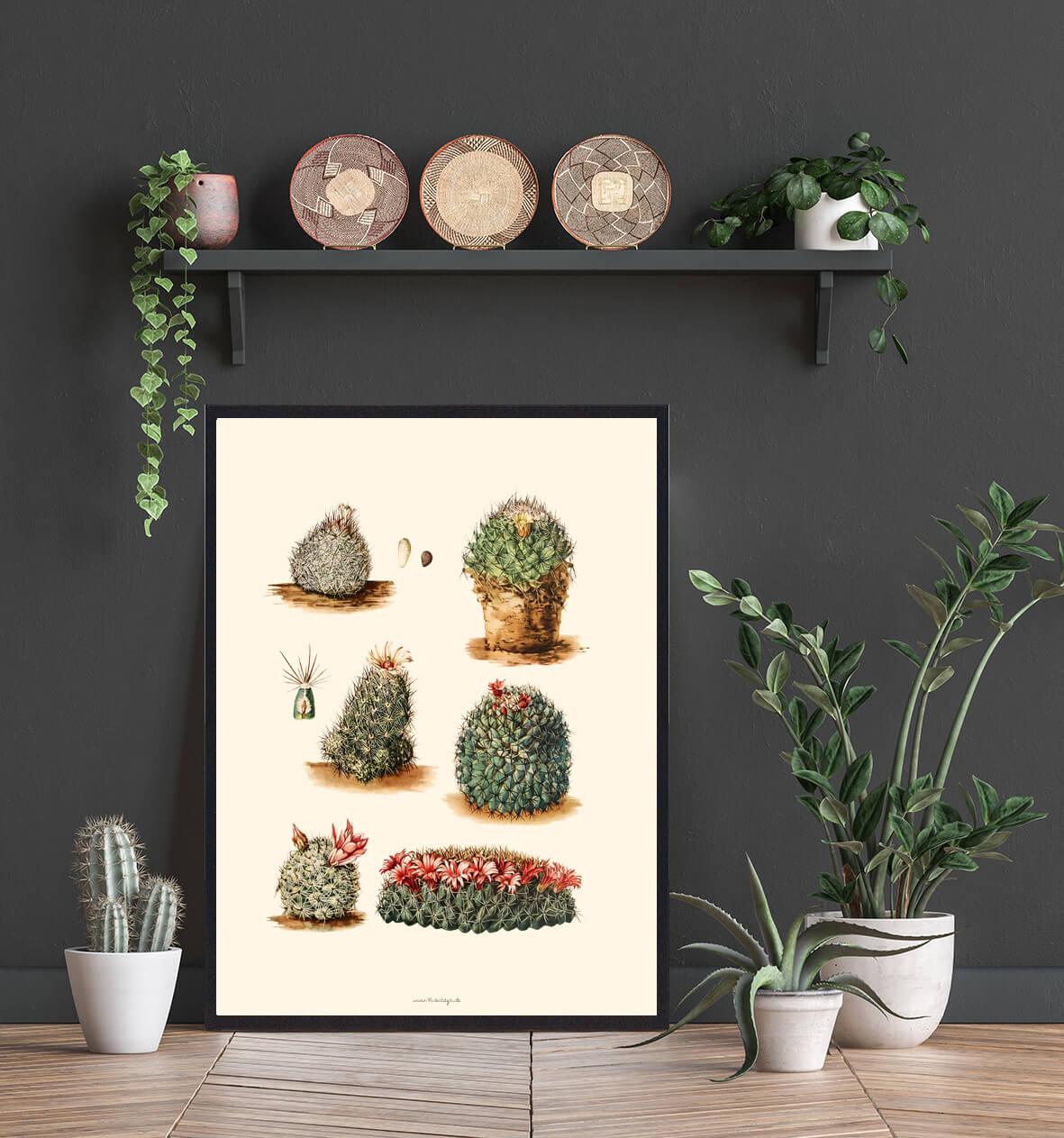 Kaktus-boligindretning3