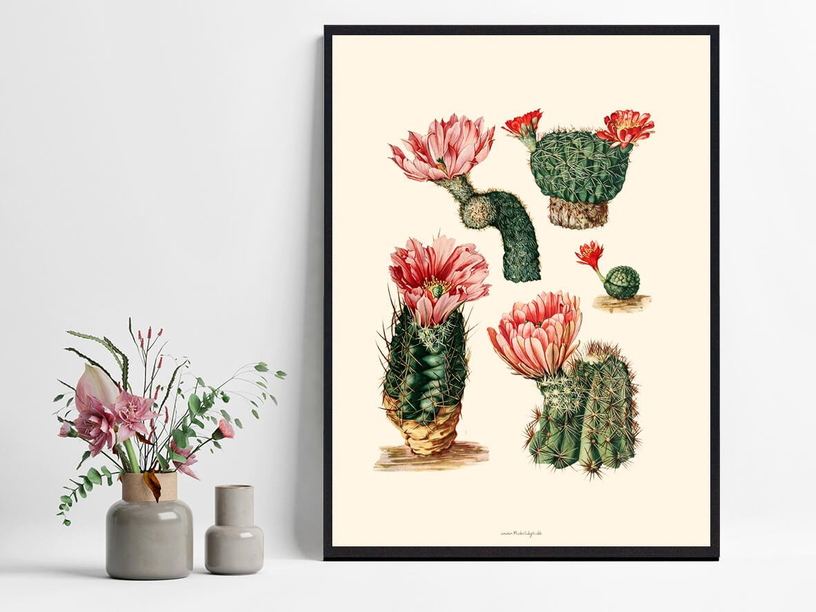 Kaktus-lyseroed-1