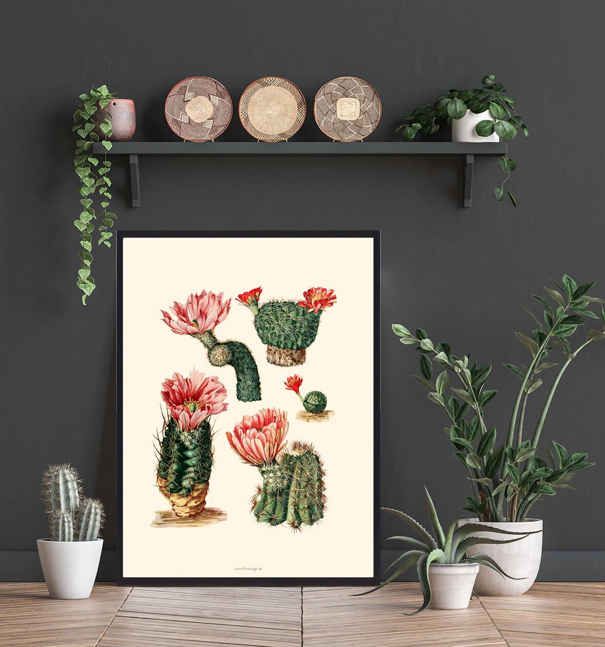 Kaktus-lyseroed-3