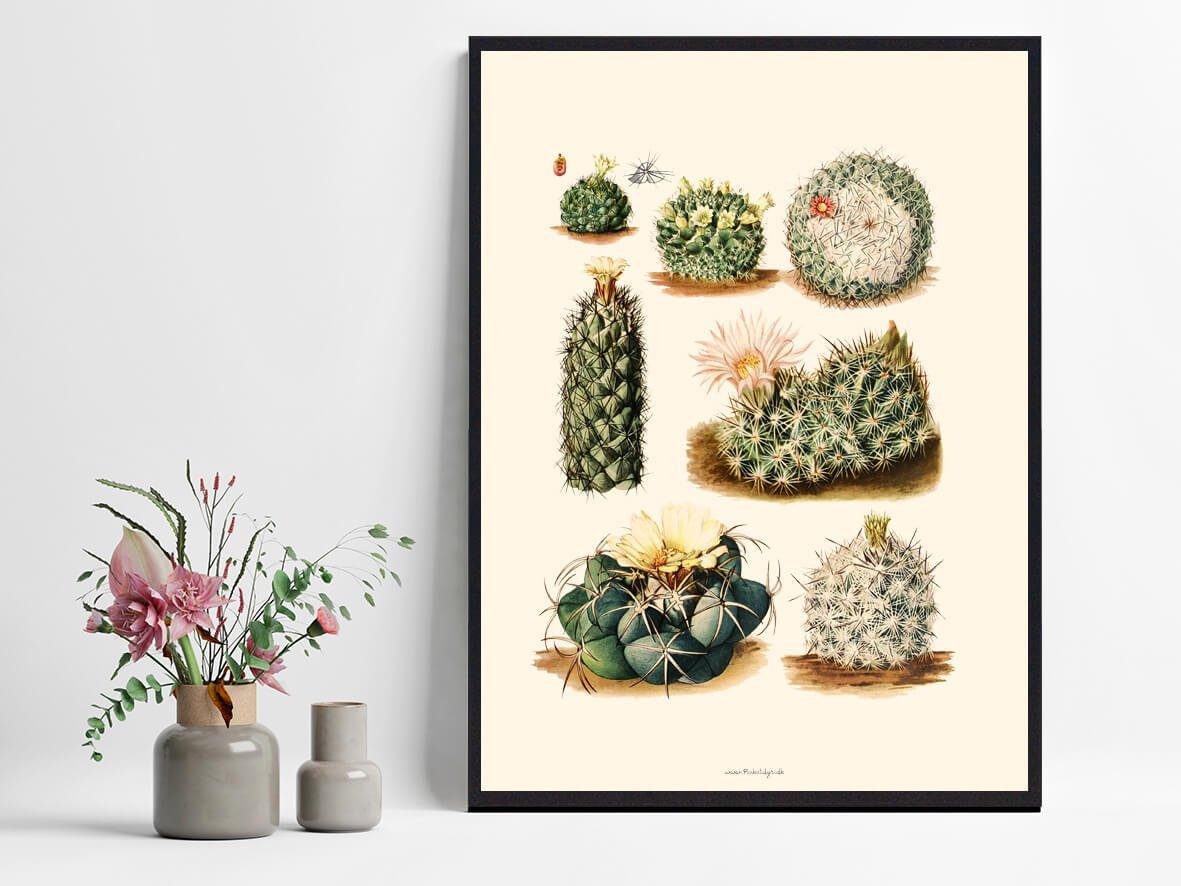 Kaktusplakat-1