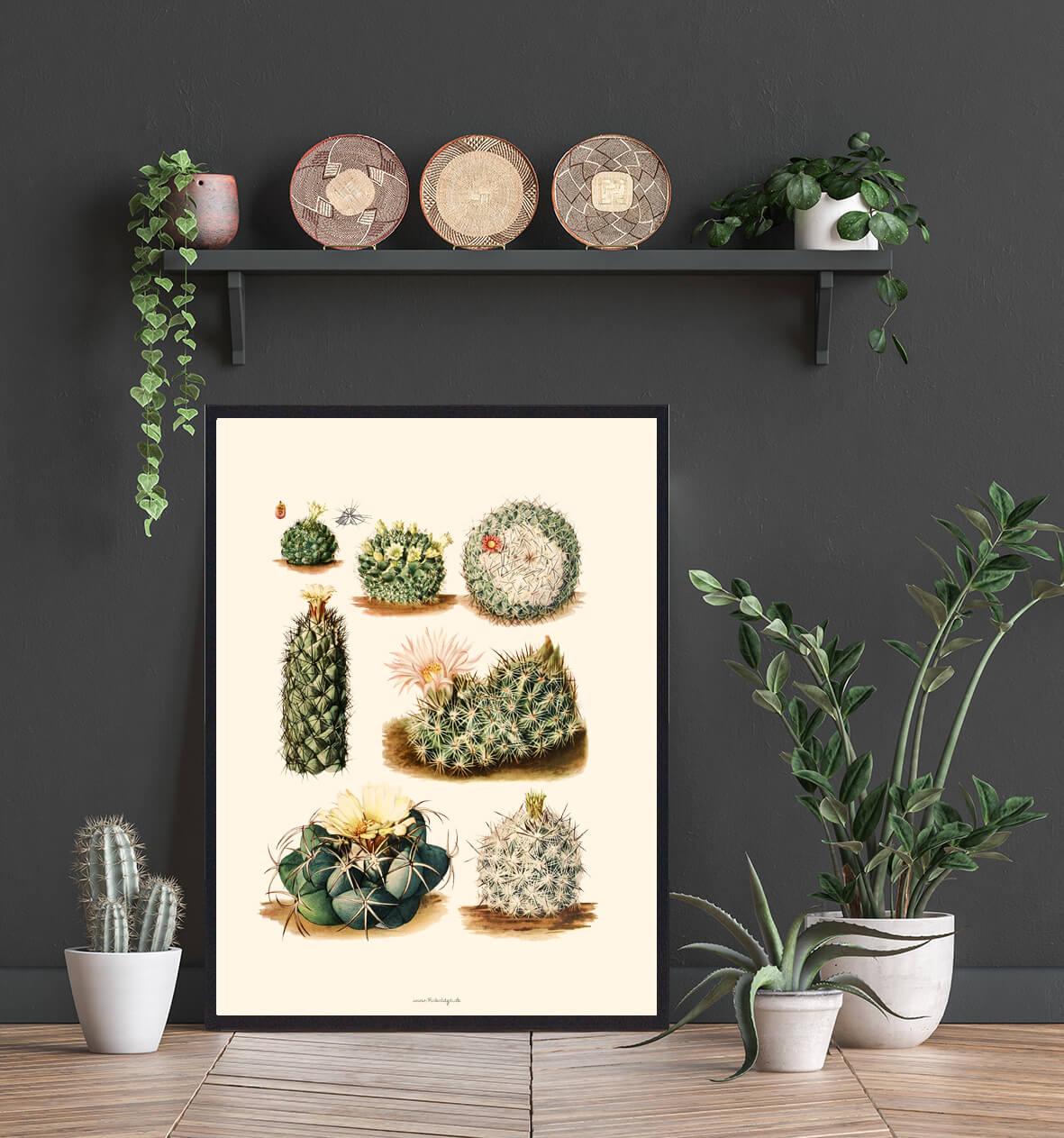 Kaktusplakat-3