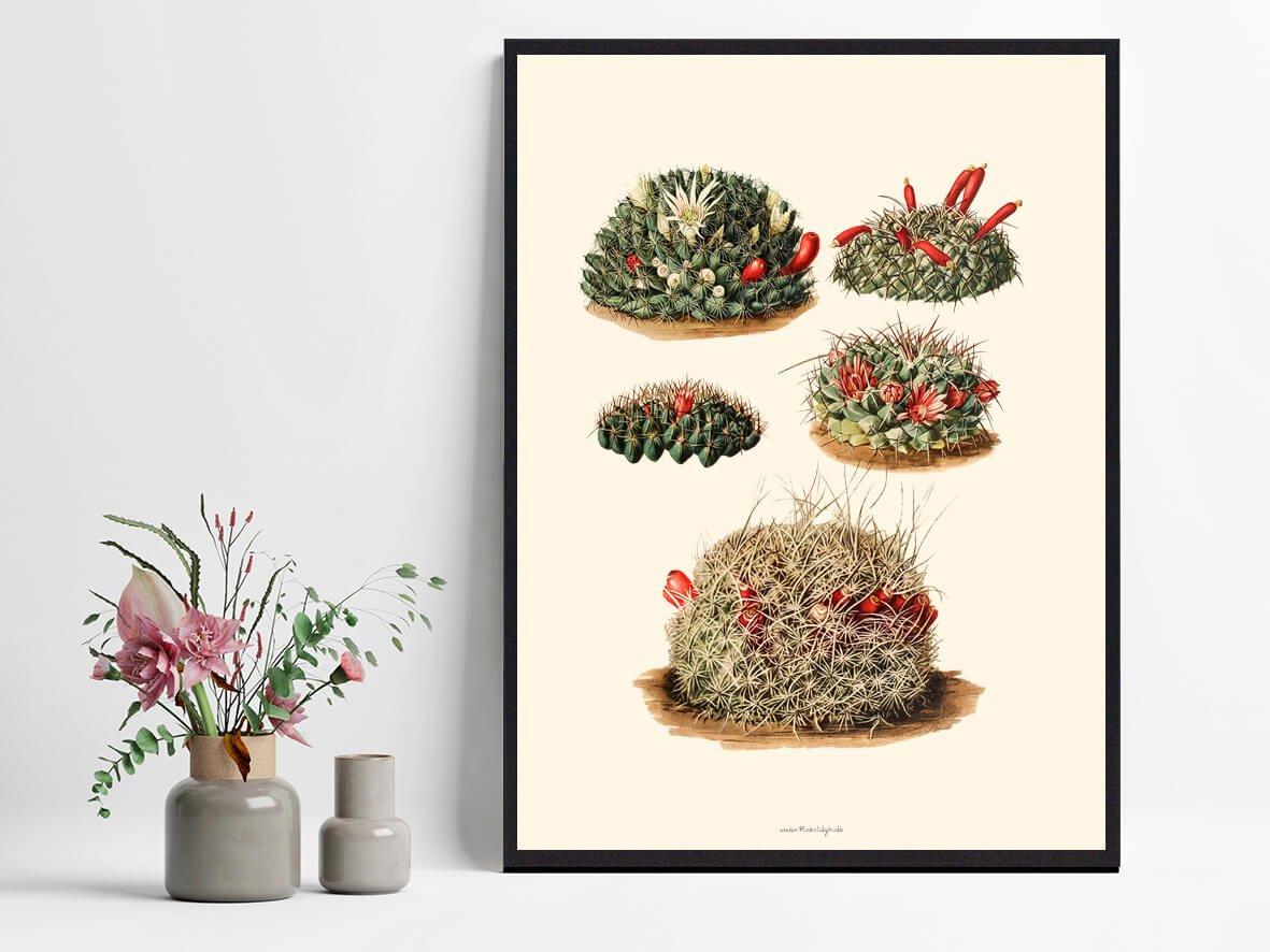Kaktusplakat-hjemmet-1