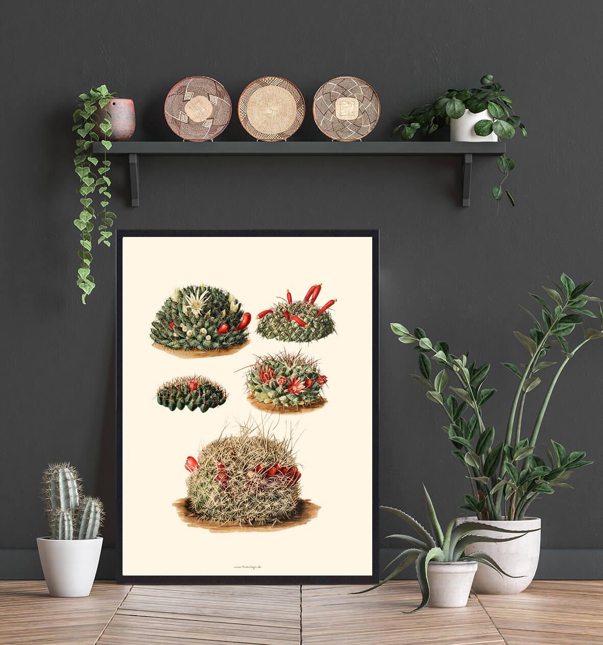 Kaktusplakat-hjemmet-3