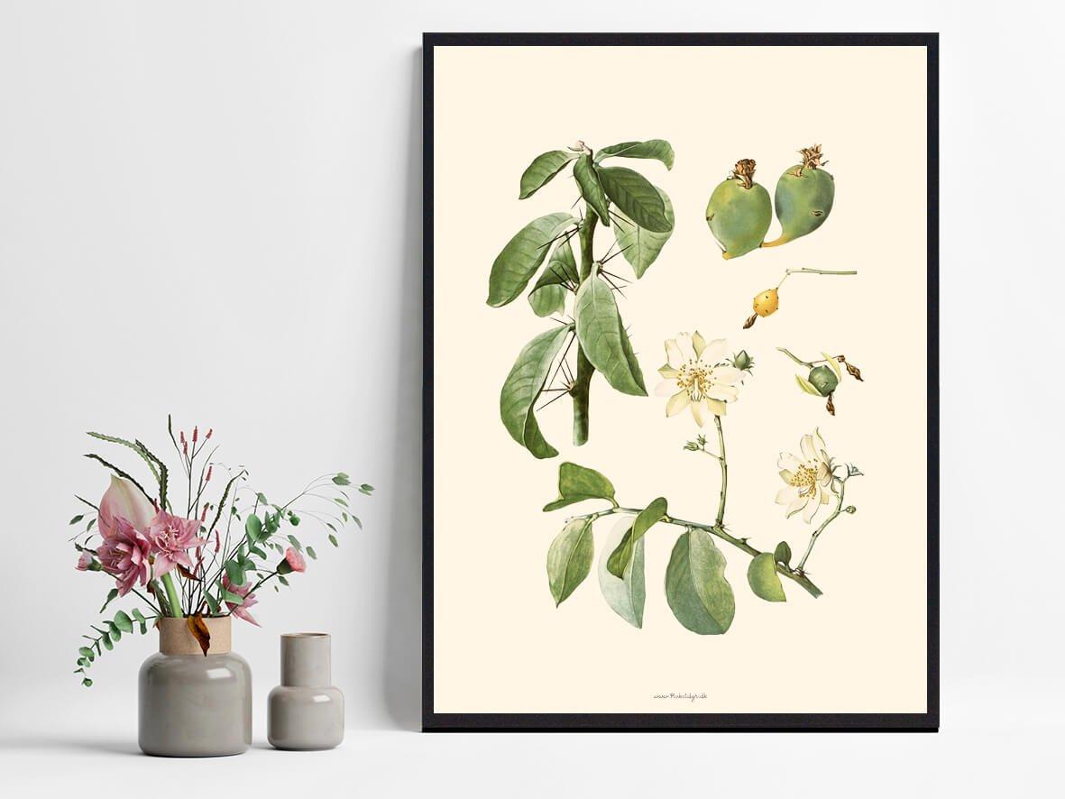 Plakat-kaktus-billig-1