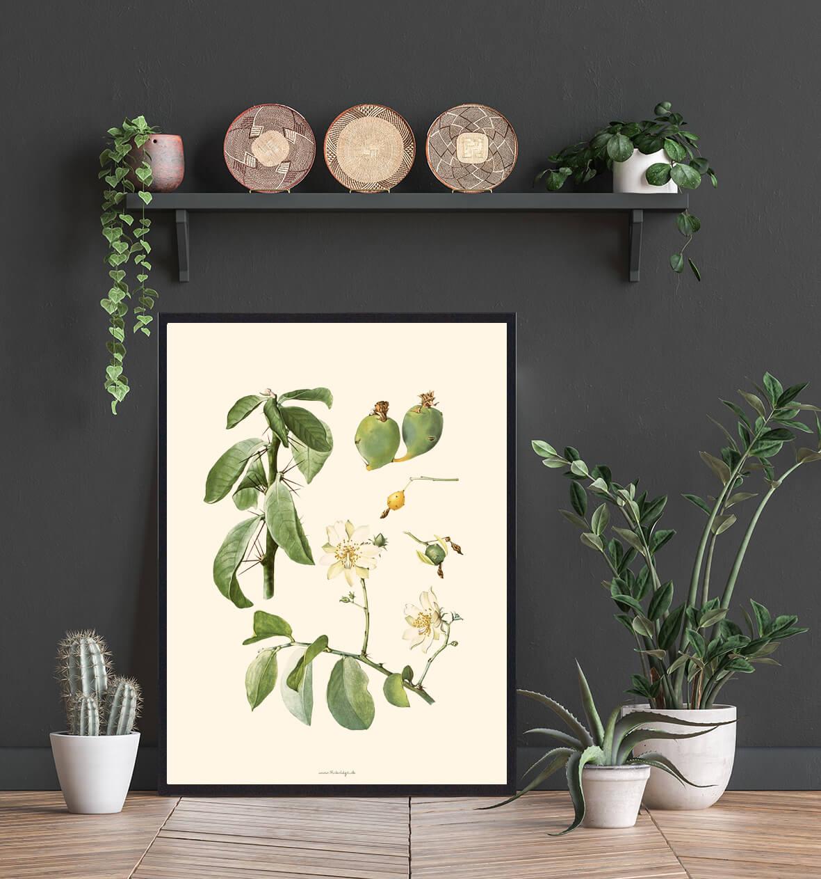 Plakat-kaktus-billig-3