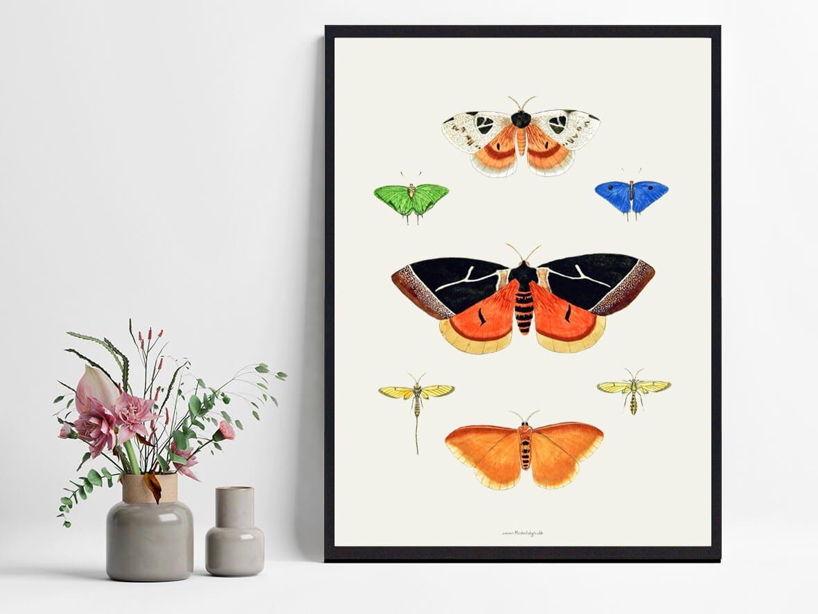 Sommerfugleplakat-indretning-2