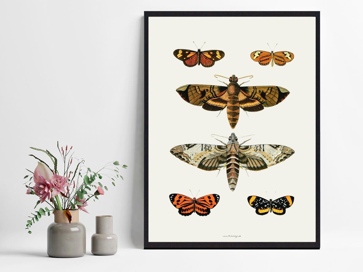 Sommerfugleplakater-indretning-2