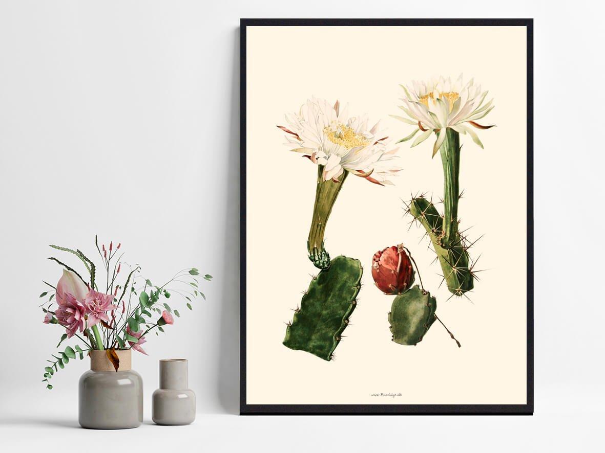 blomst-kaktus-plakat-1